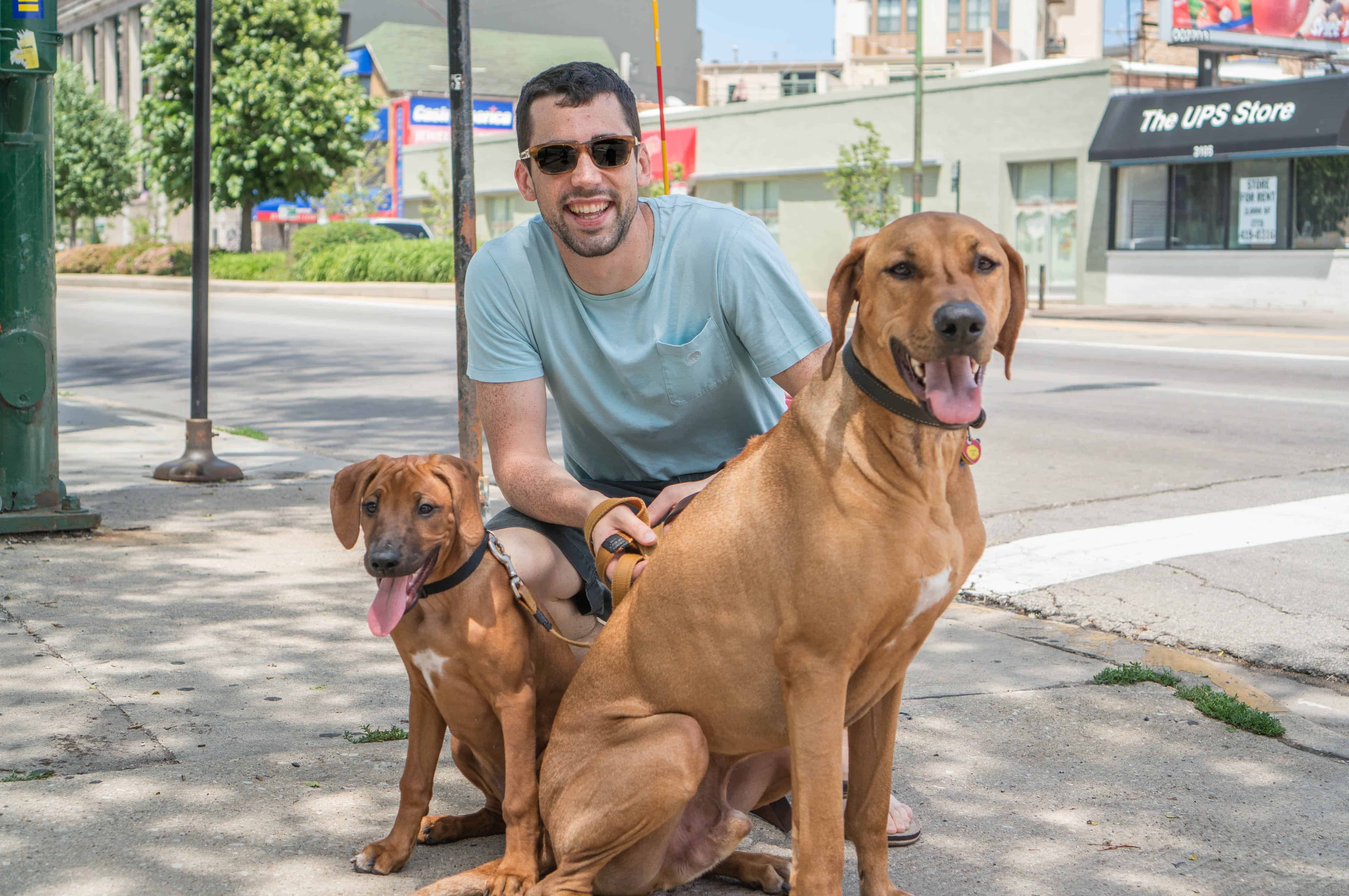 Rhodesian Ridgeback, puppy, chicago, adventure, blog, dogs, marking our territory