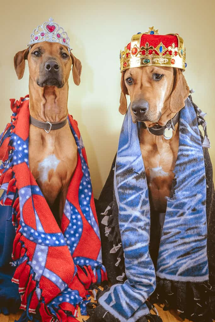 Rhodesian Ridgeback, blog, marking our territory, chicago, adventure