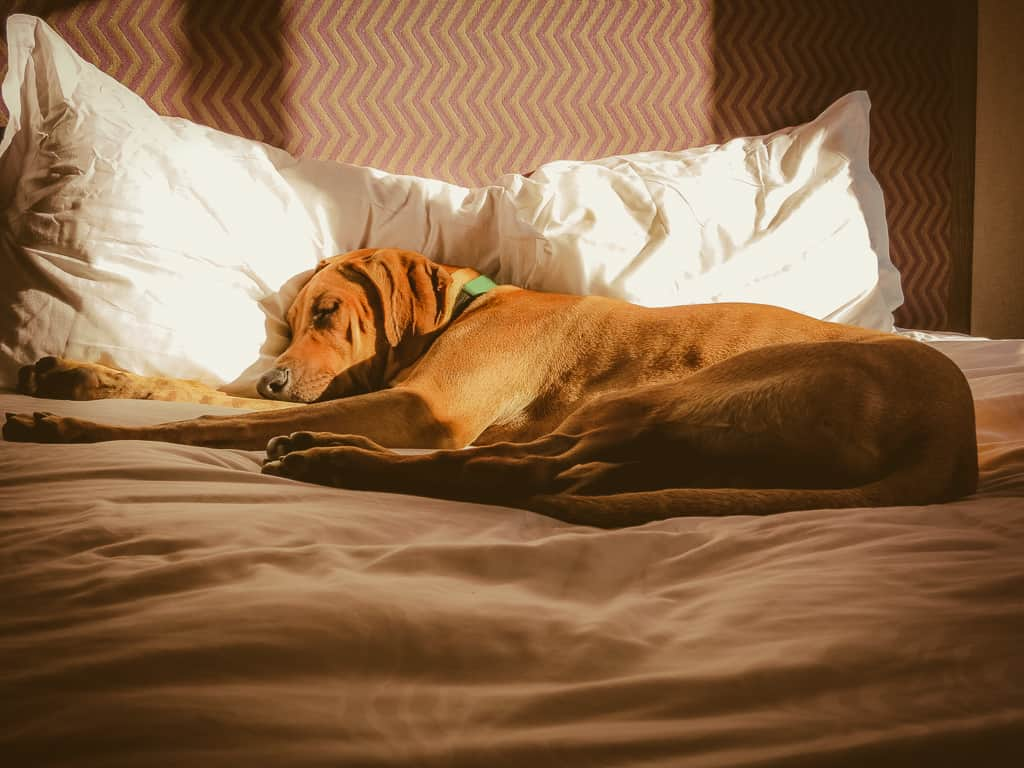 dog friendly hotel, pet friendly hotel, dog friendly travel tips