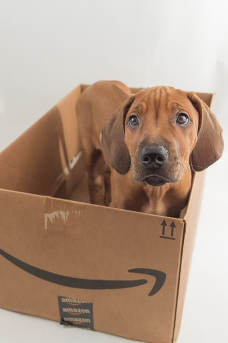 Rhodesian Ridgeback, puppy, cute, amazon