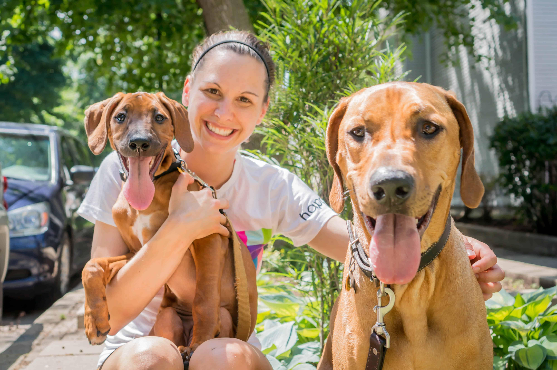 Rhodesian Ridgeback, puppy, cute, dog, chicago