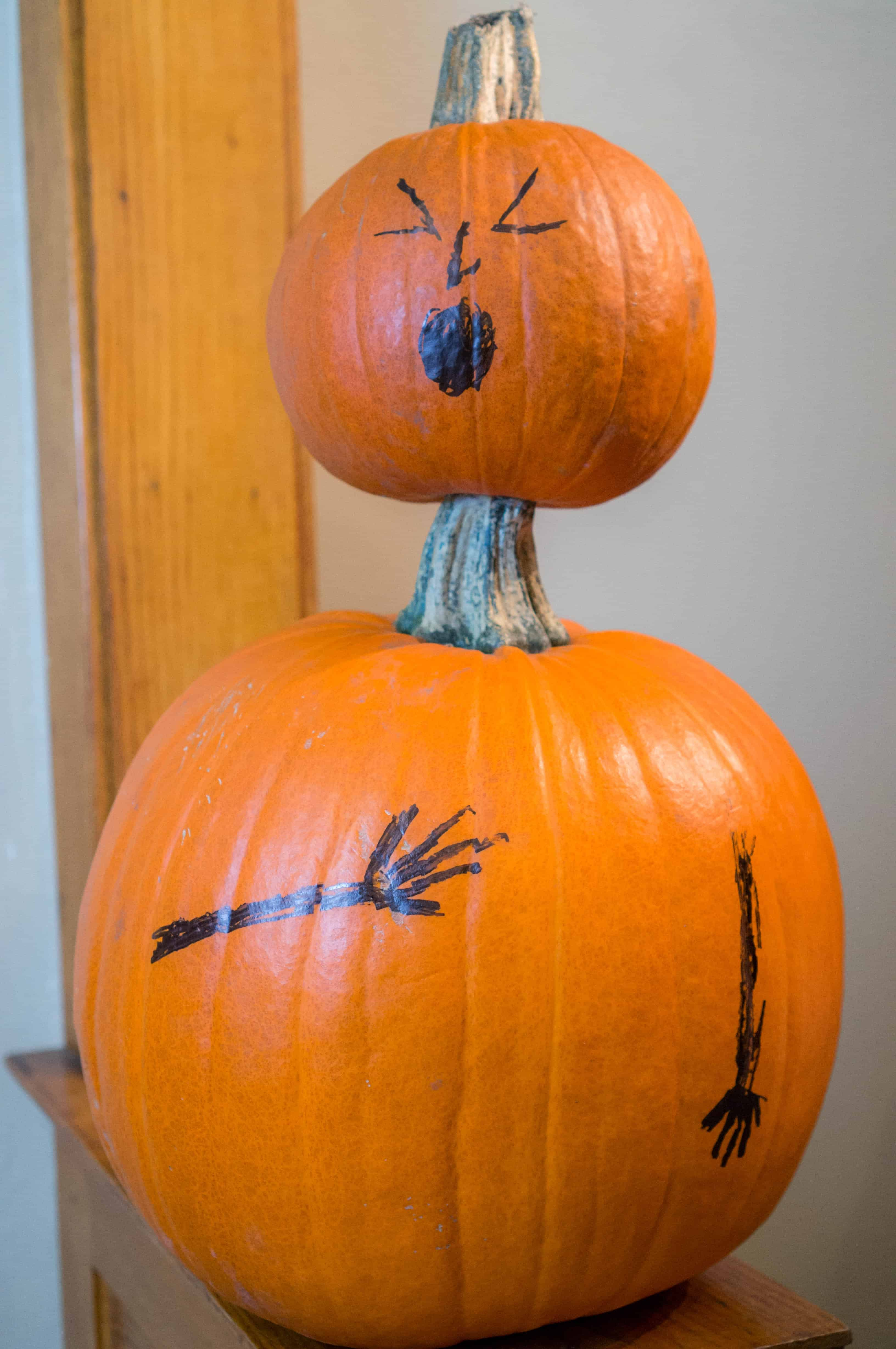 funny pumpkin, dog, surgery, hospital, marking our territory, doctor, puppy