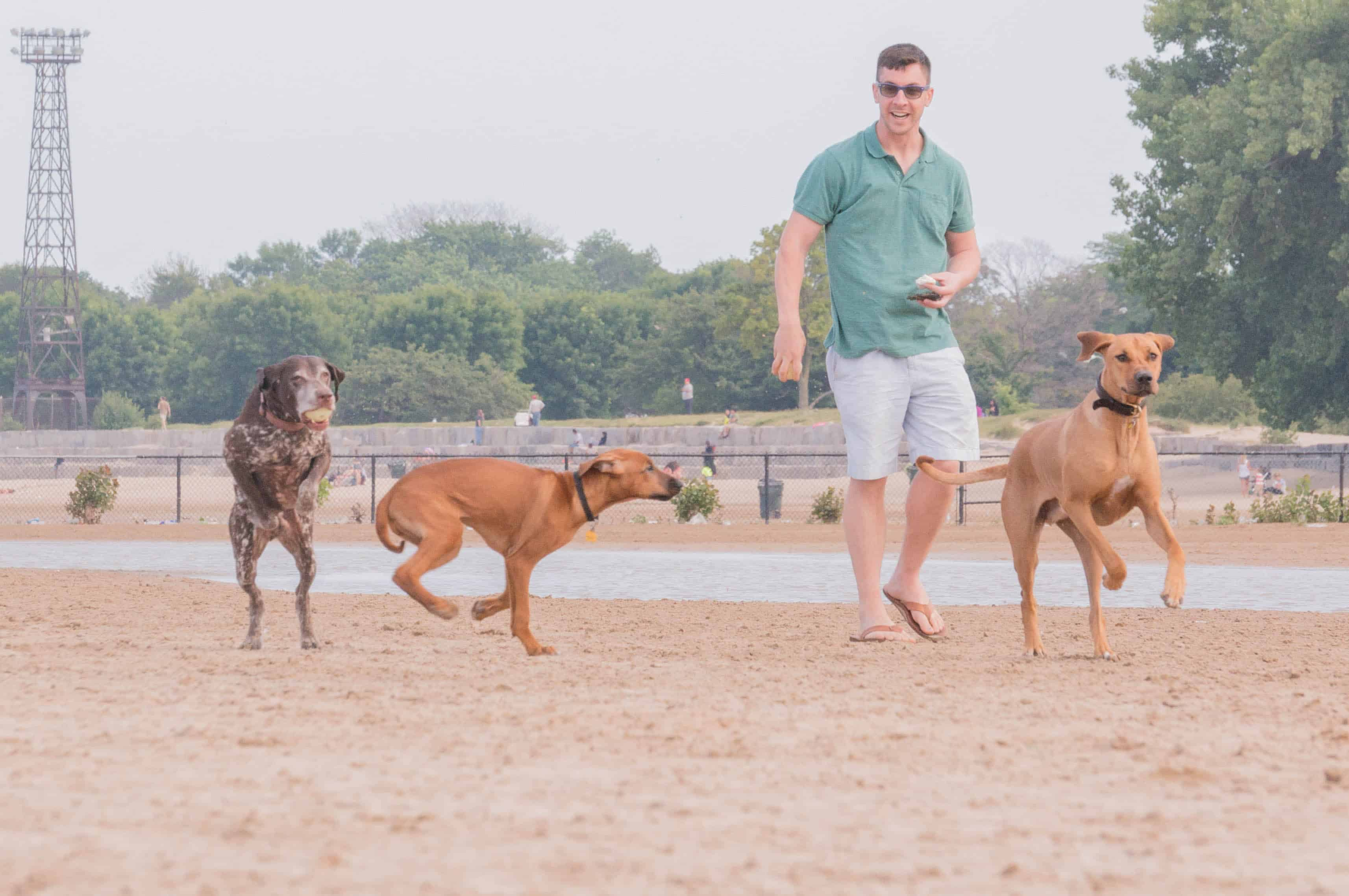 Montrose dog beach, chicago, dog-friendly, marking our territory, chicago