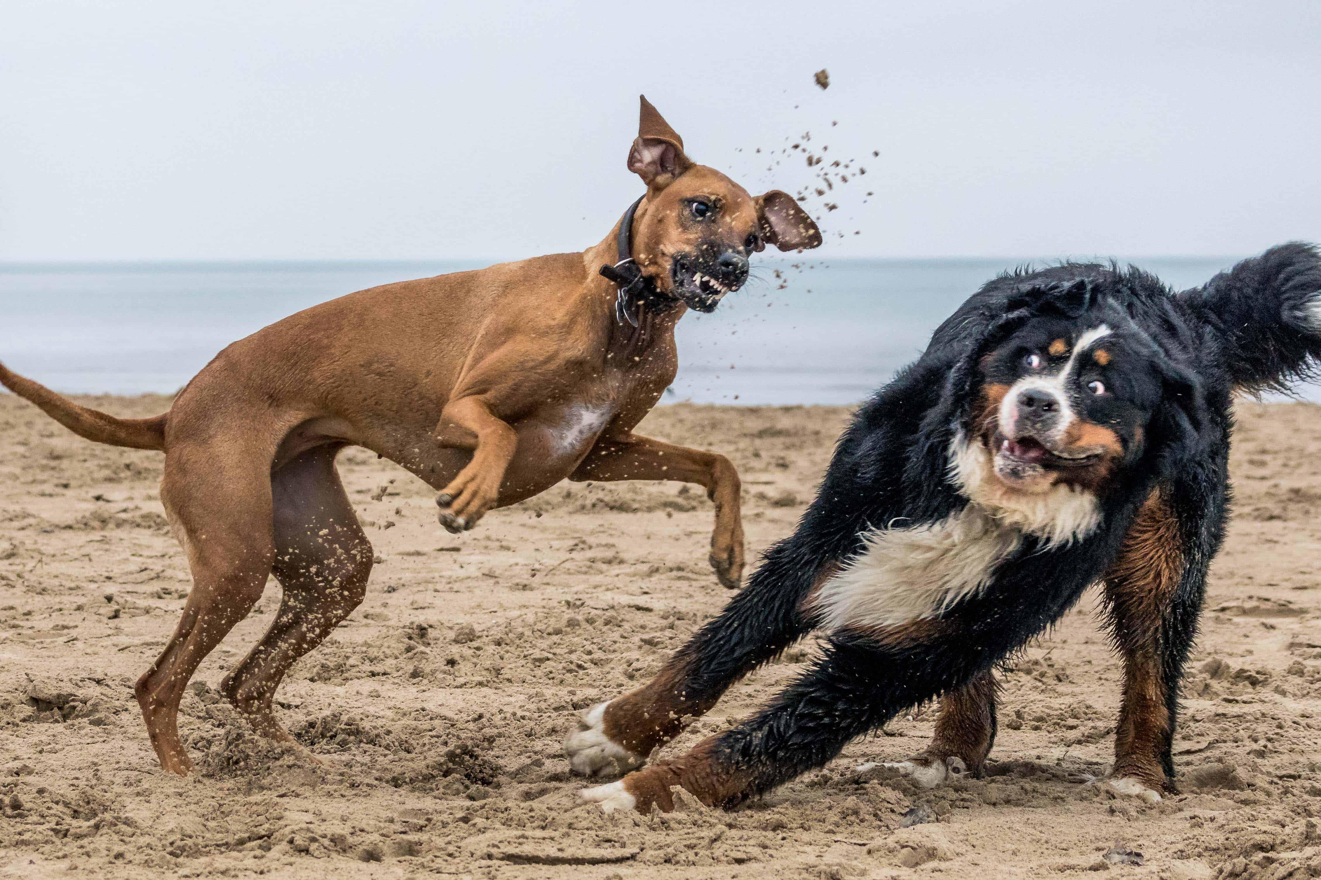 Montrose Dog Beach, Chicago