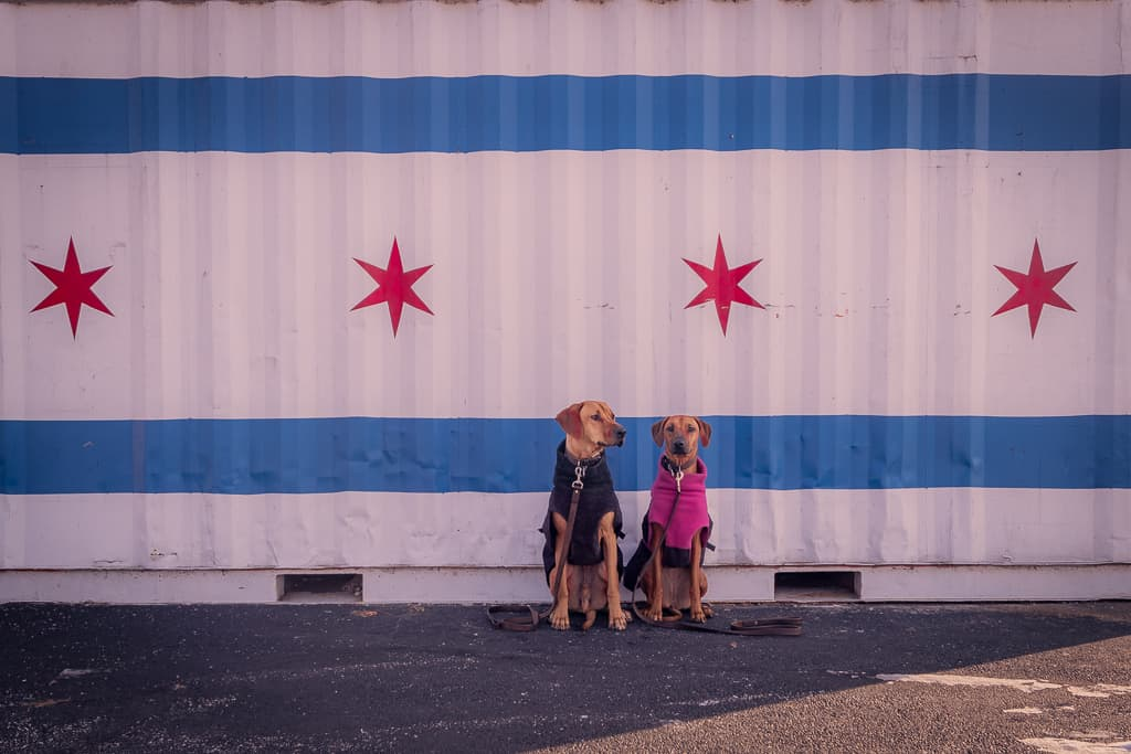 Rhodesian Ridgeback, blog, chicago, adventure