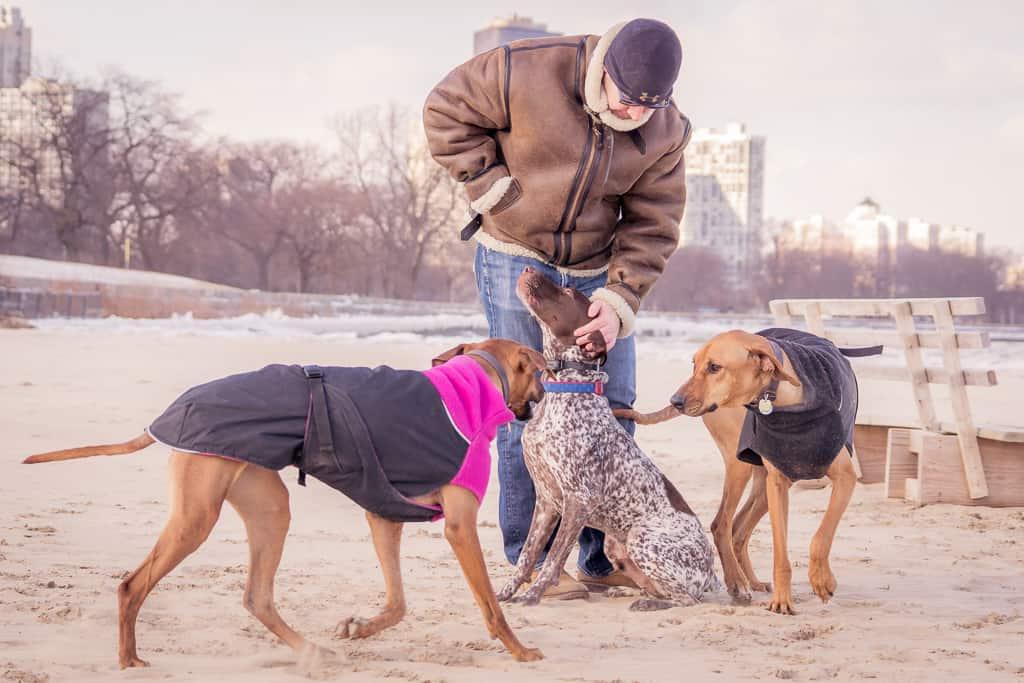 Montrose Dog Beach, German Shorthaired Pointer, Chicago, blog