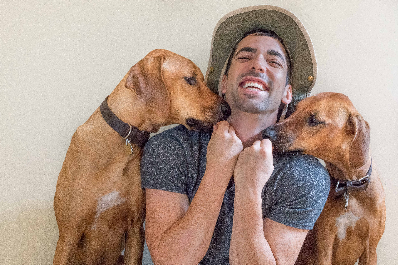 Rhodesian Ridgeback, puppy, cute , chicago