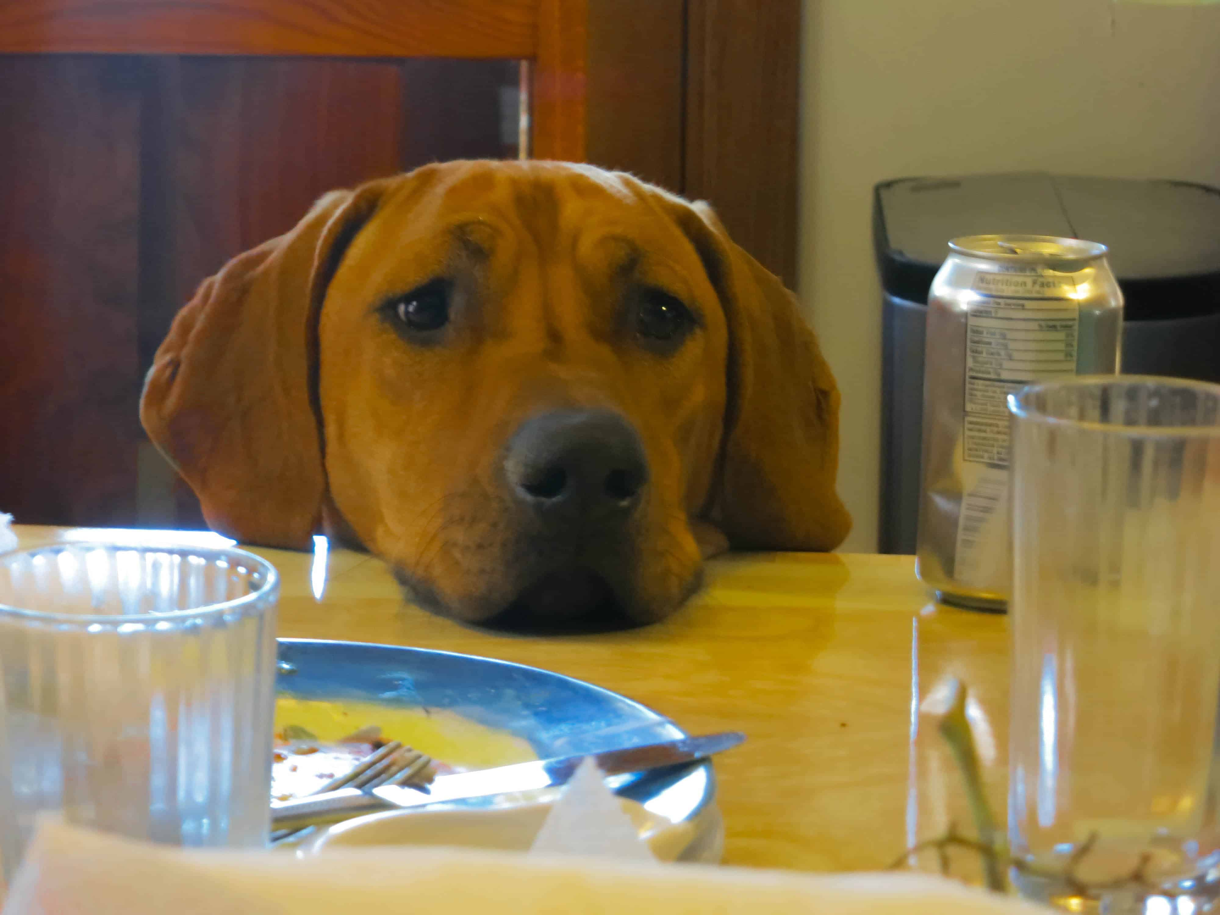 Rhodesian Ridgeback, adventure, marking our territory, mr. eko, dogs, photos