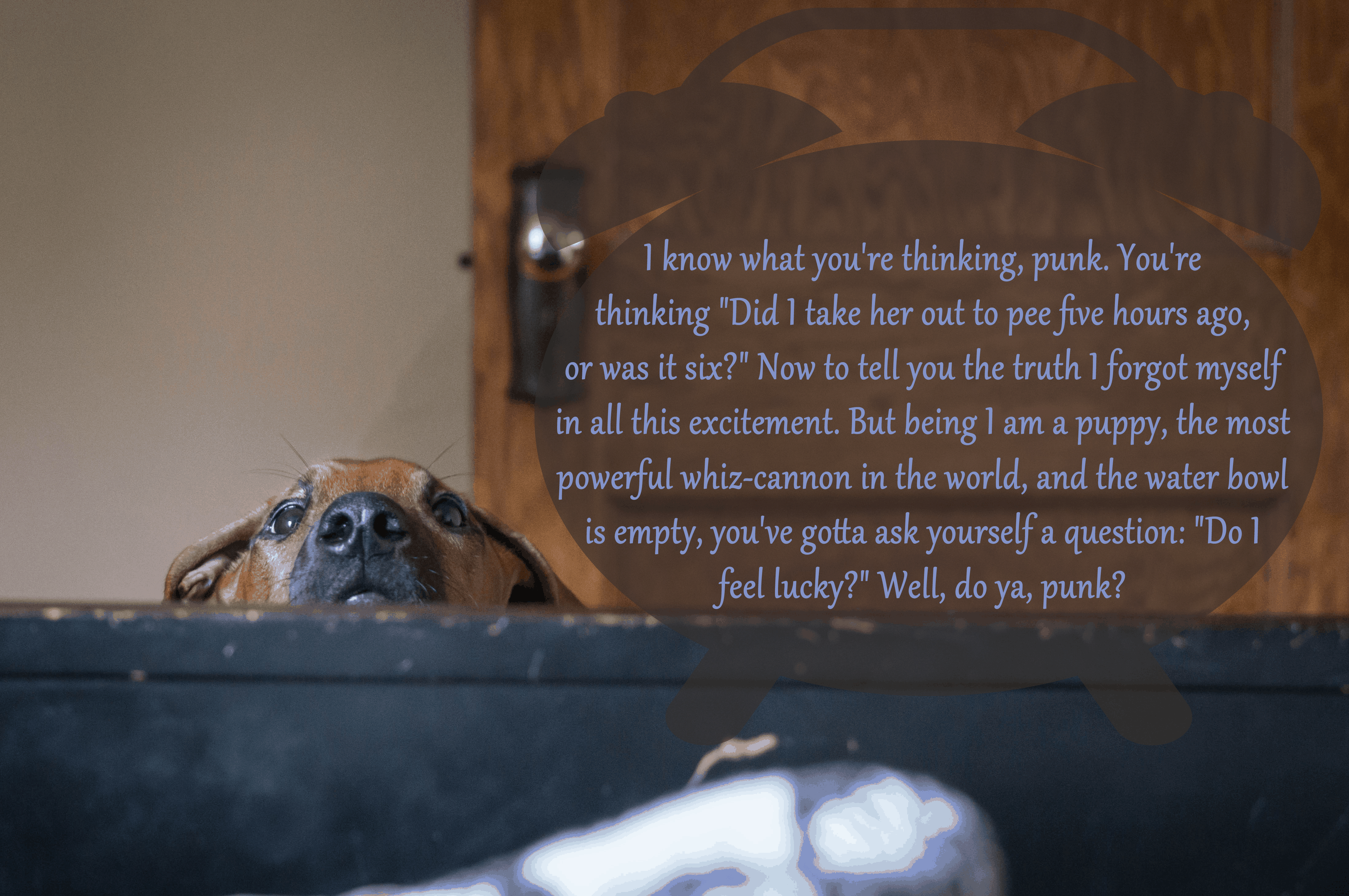 Rhodesian Ridgeback, puppy, funny, marking our territory, adventure, blog, dogs