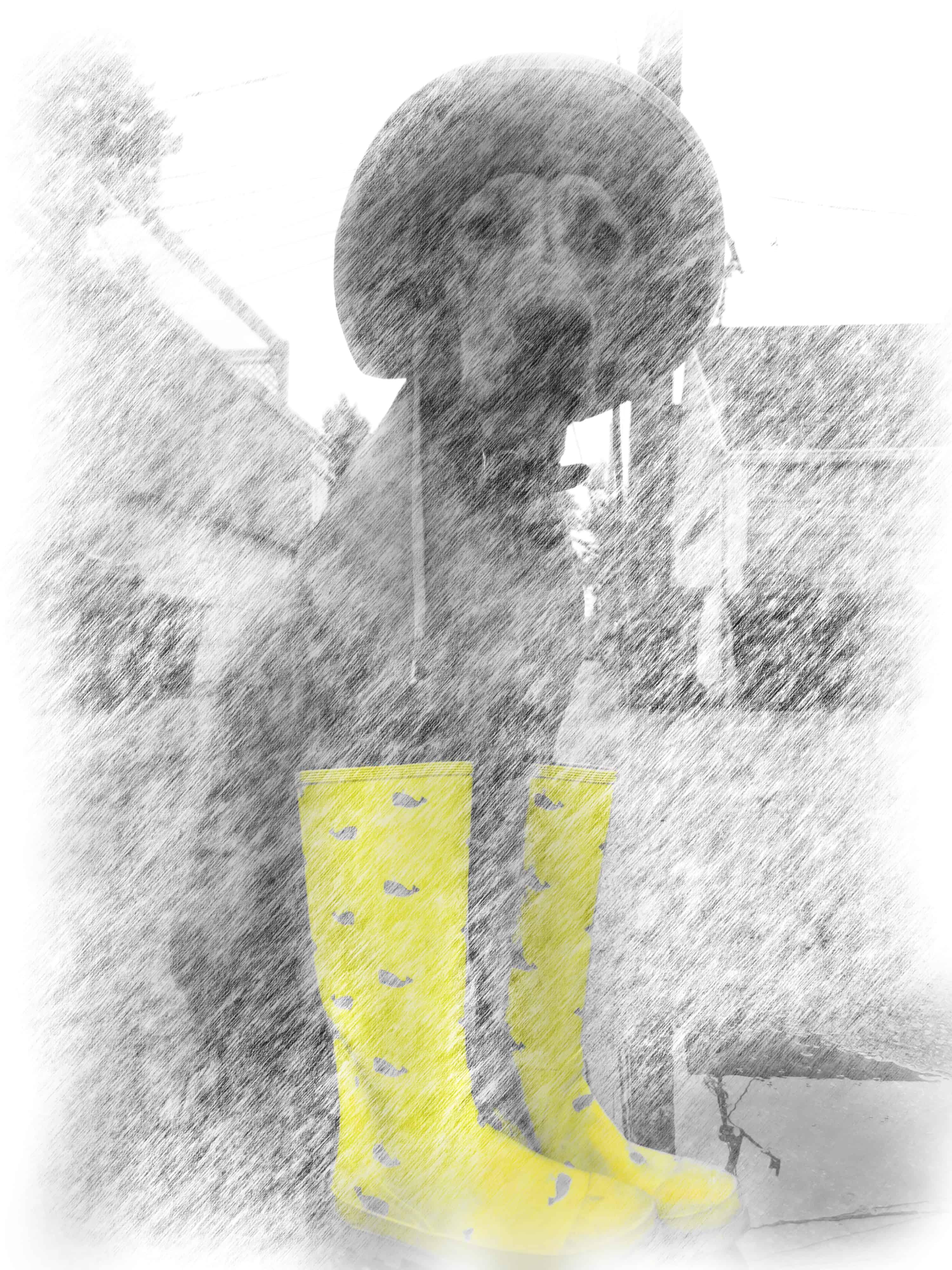 rhodesian ridgeback, dog blog