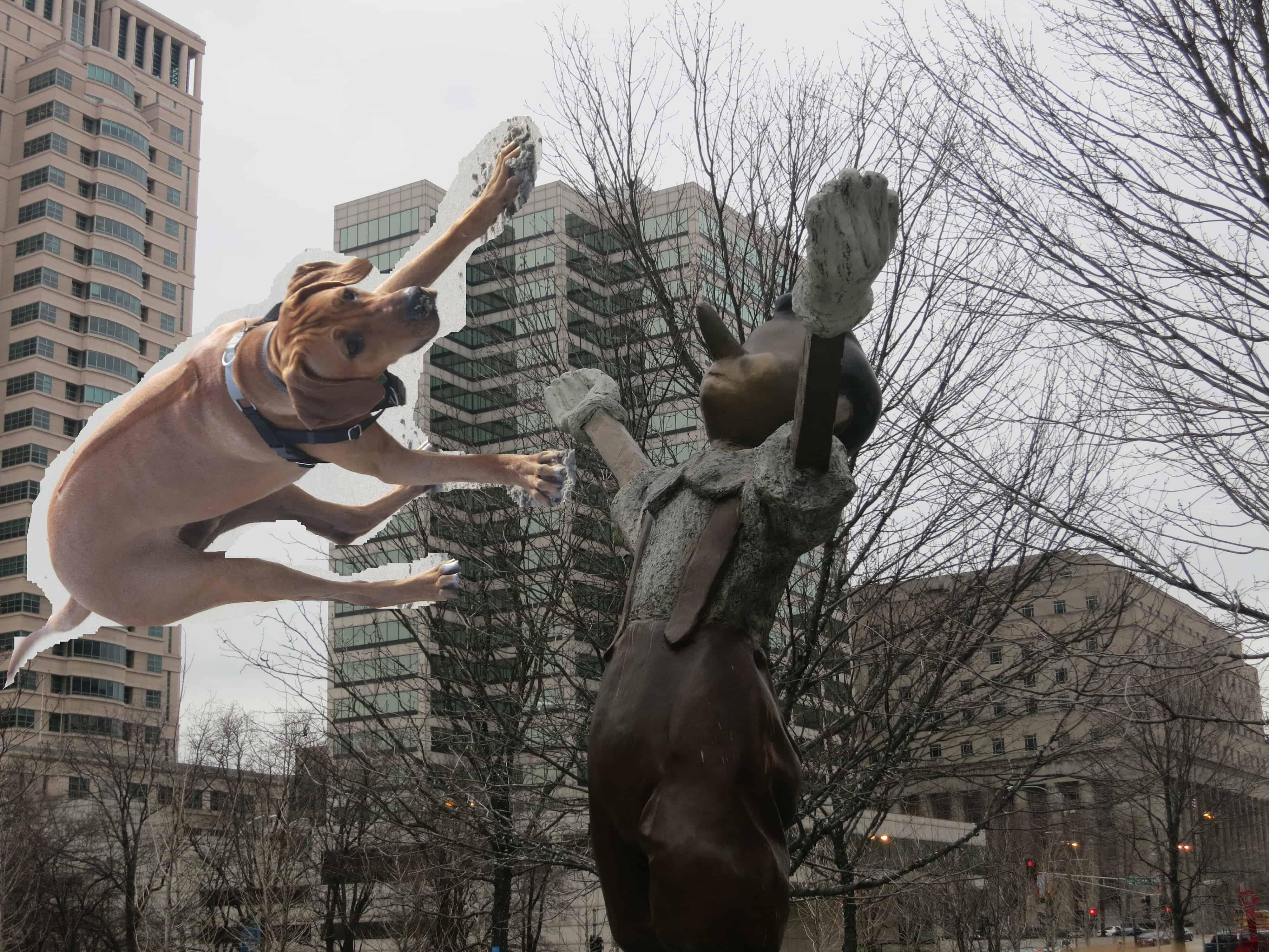 dog friendly st louis