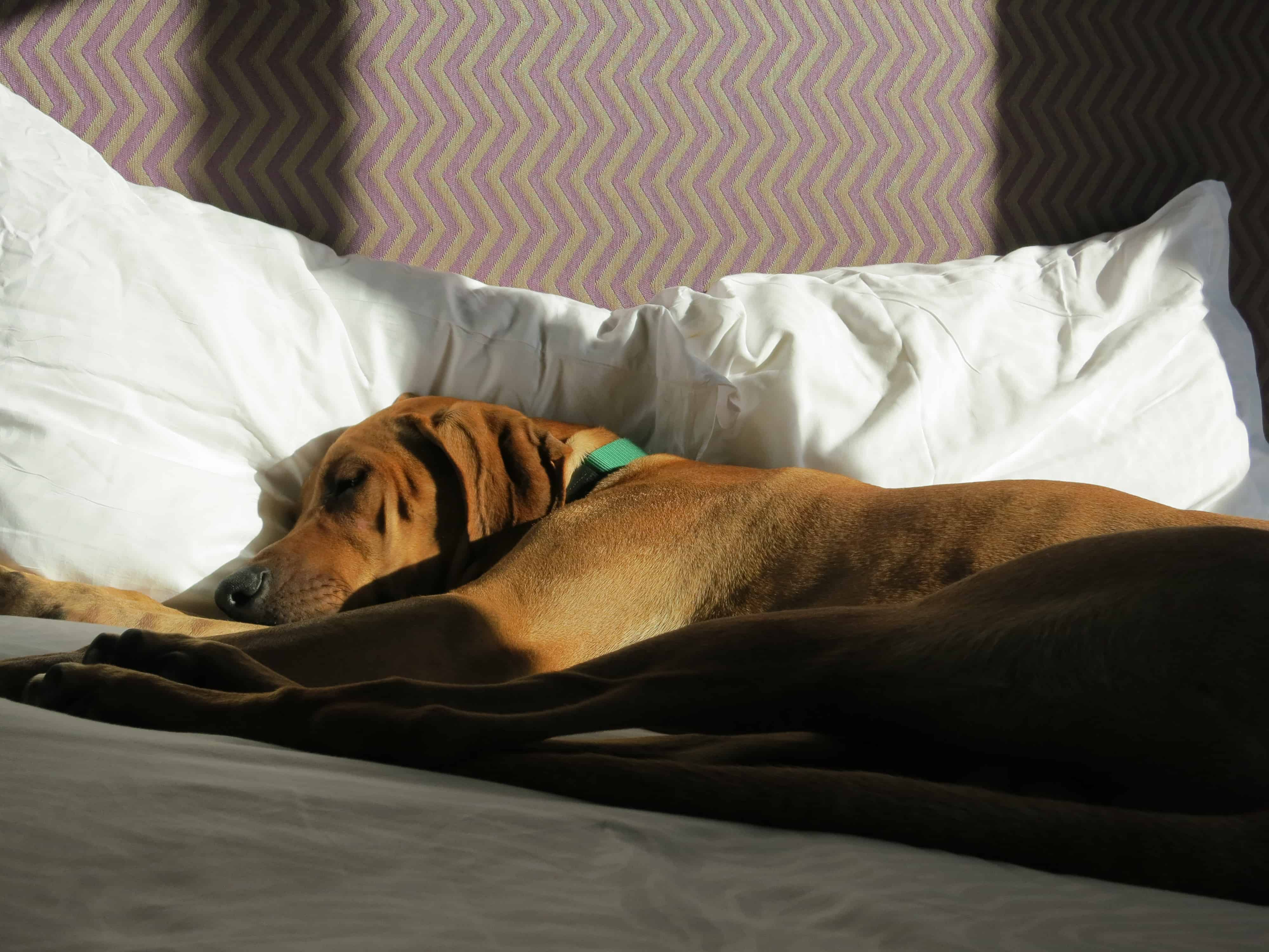 dog friendly pet blog
