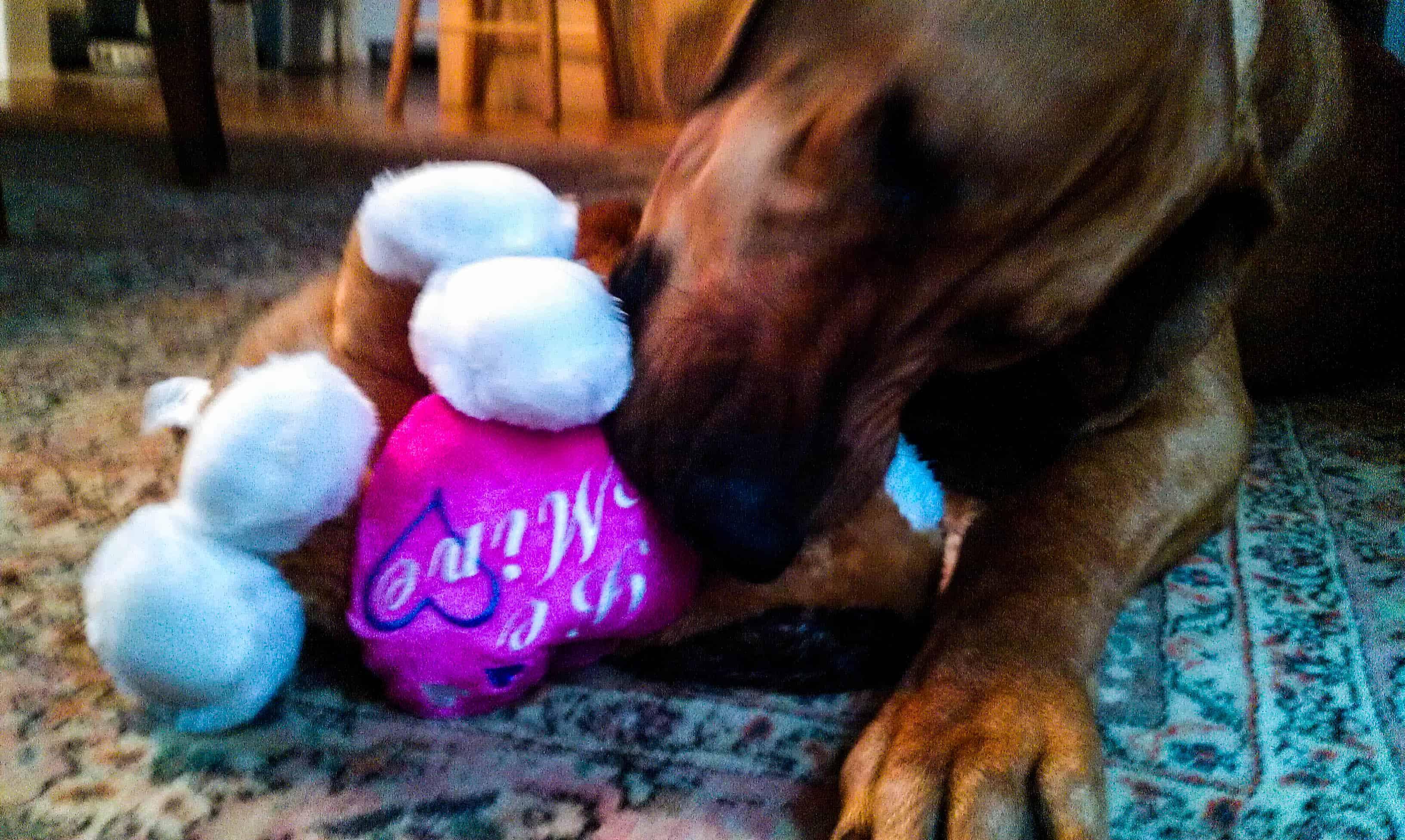 Rhodesian Ridgeback, dog valentine's day