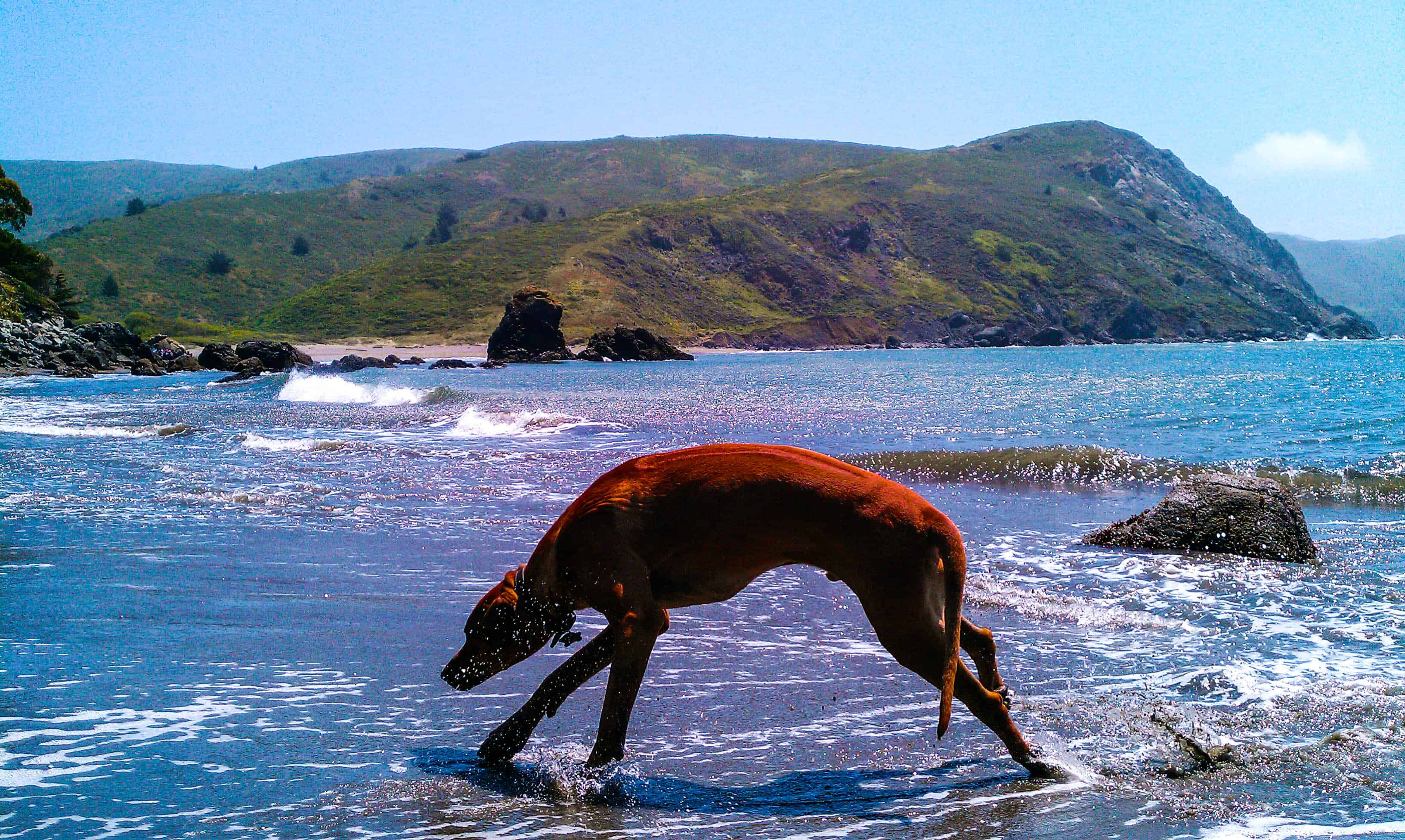 Rhodesian ridgeback, adventure, dog blog