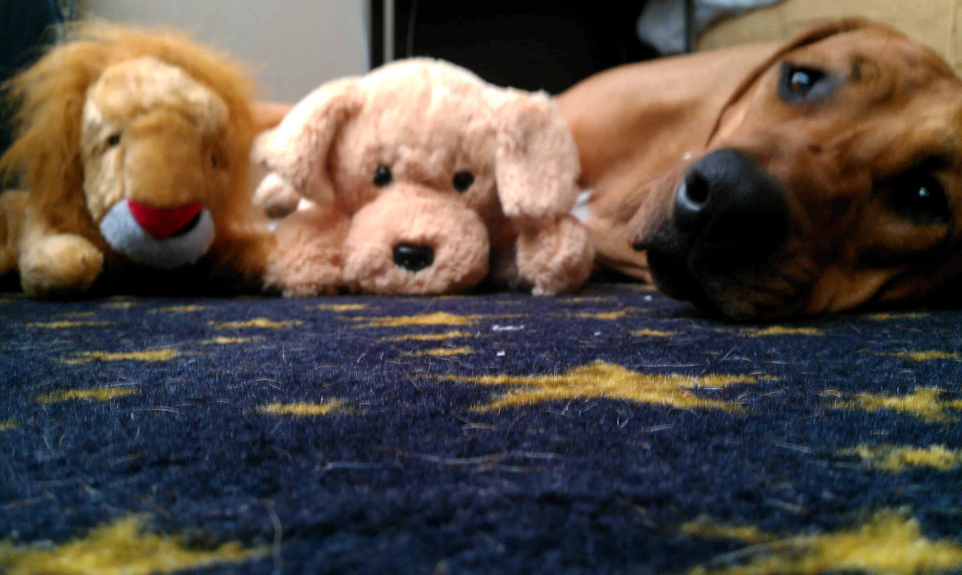 dog friendly portland oregon