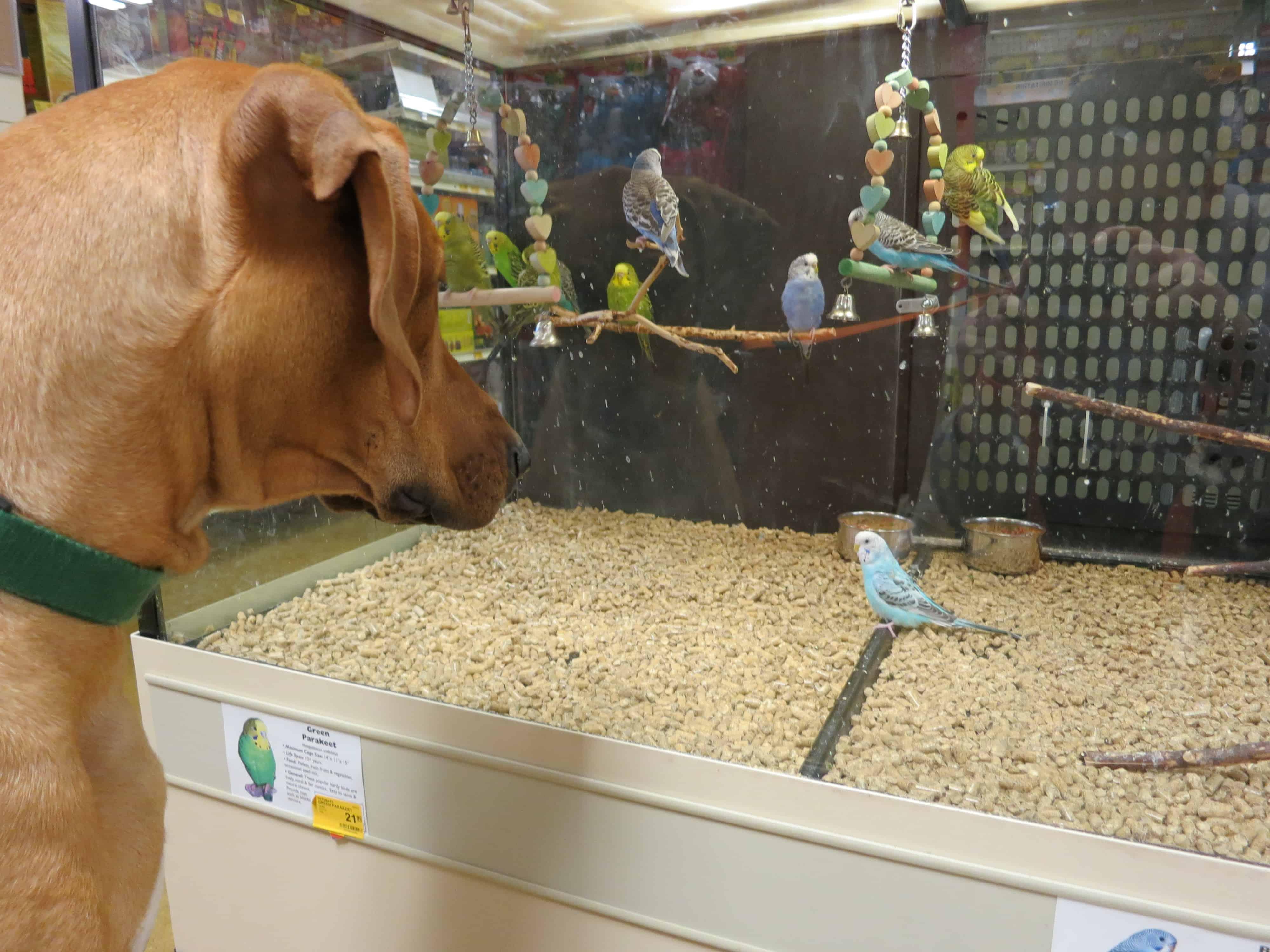 pet-friendly-travel-pet-store