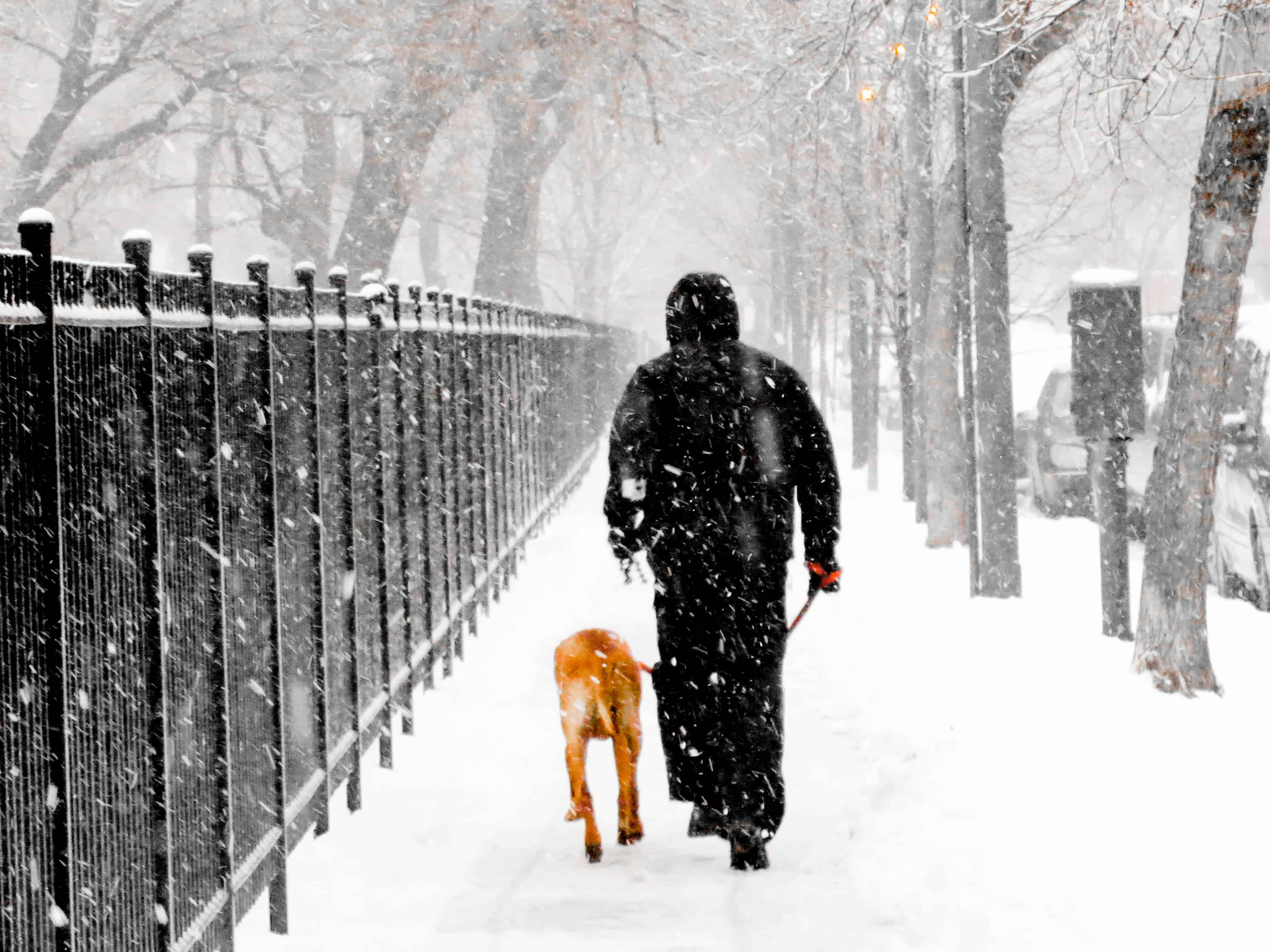 dog blog, pet adventure