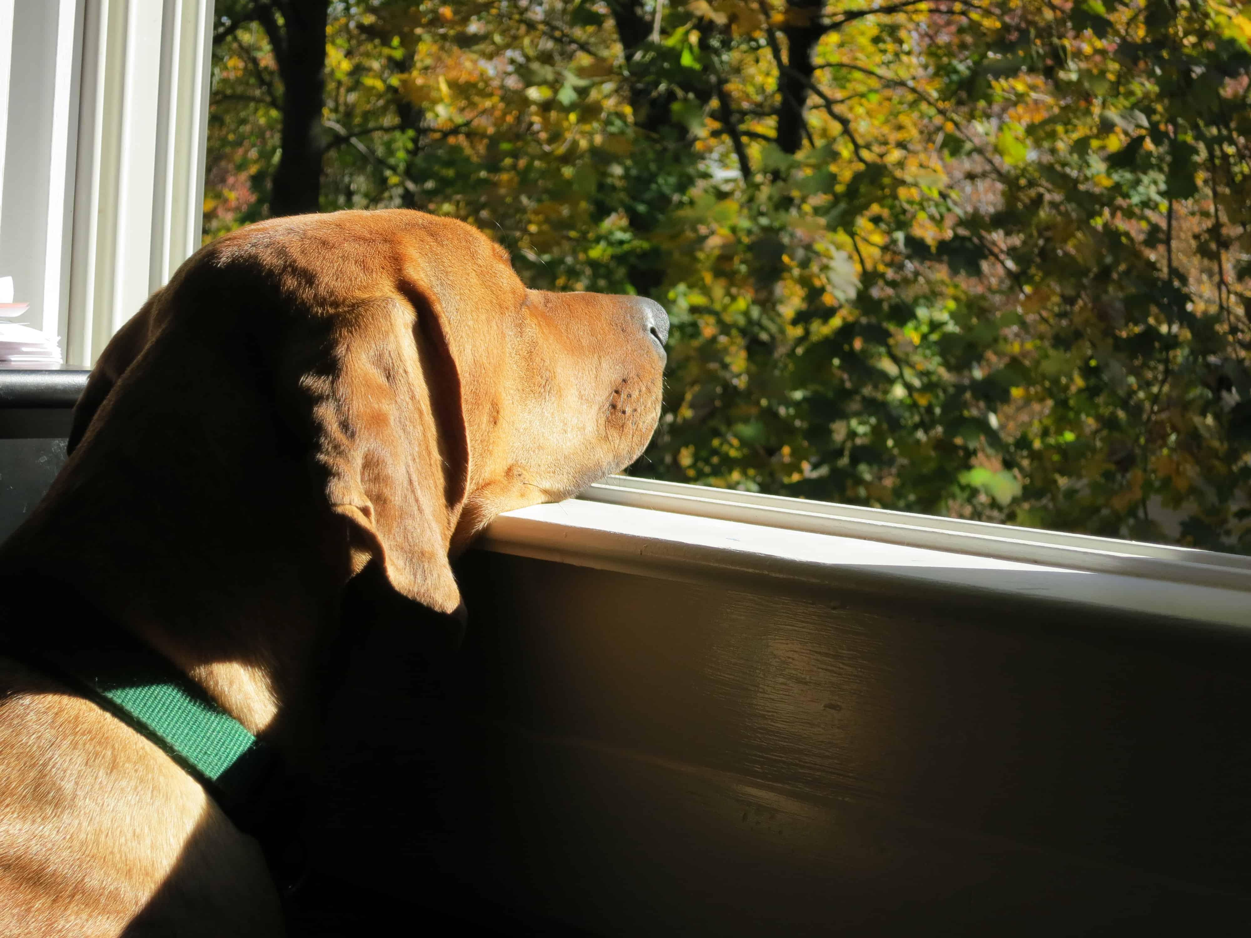 Pet-friendly-travel-window