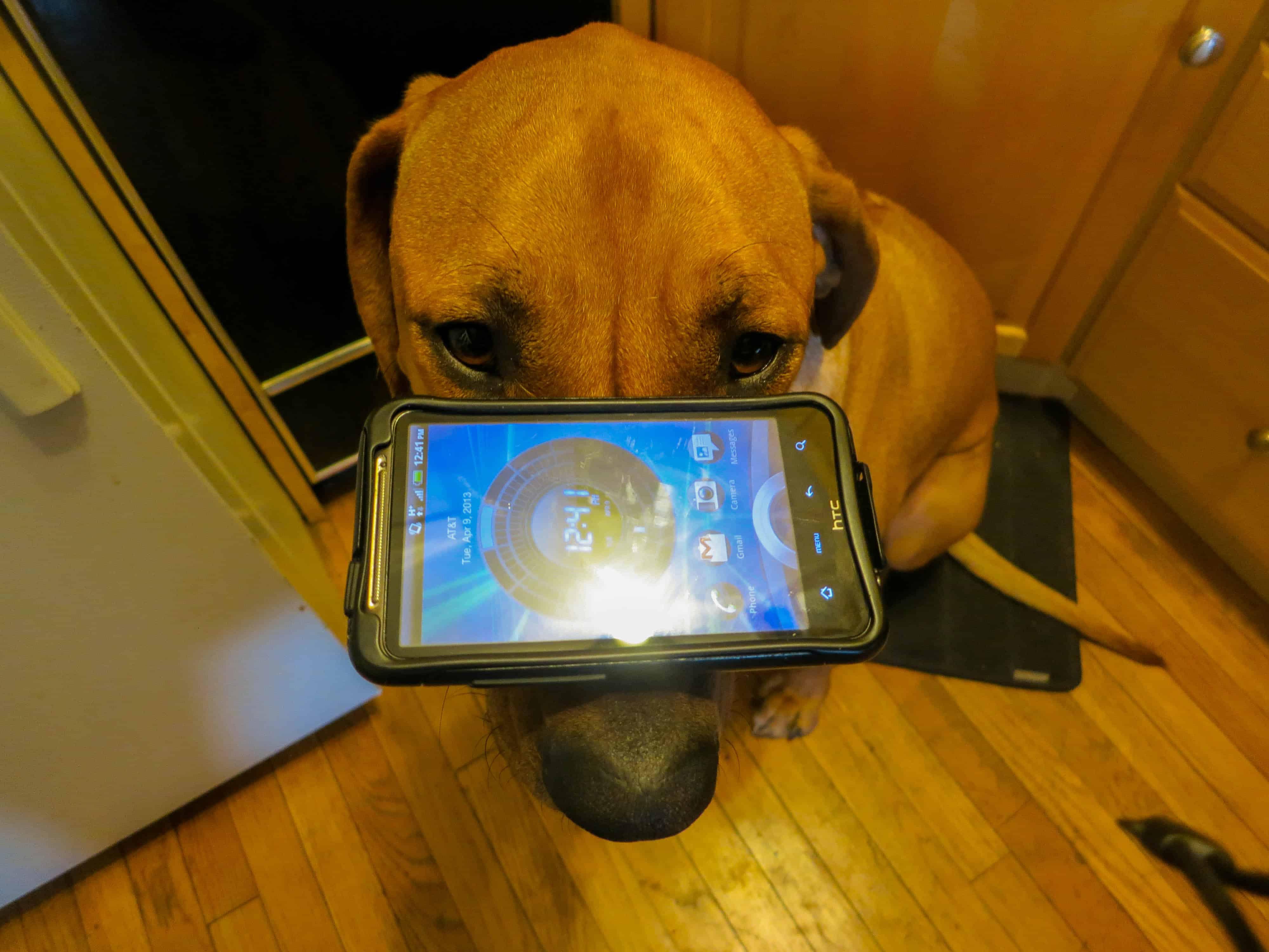 dog blog, dog adventure