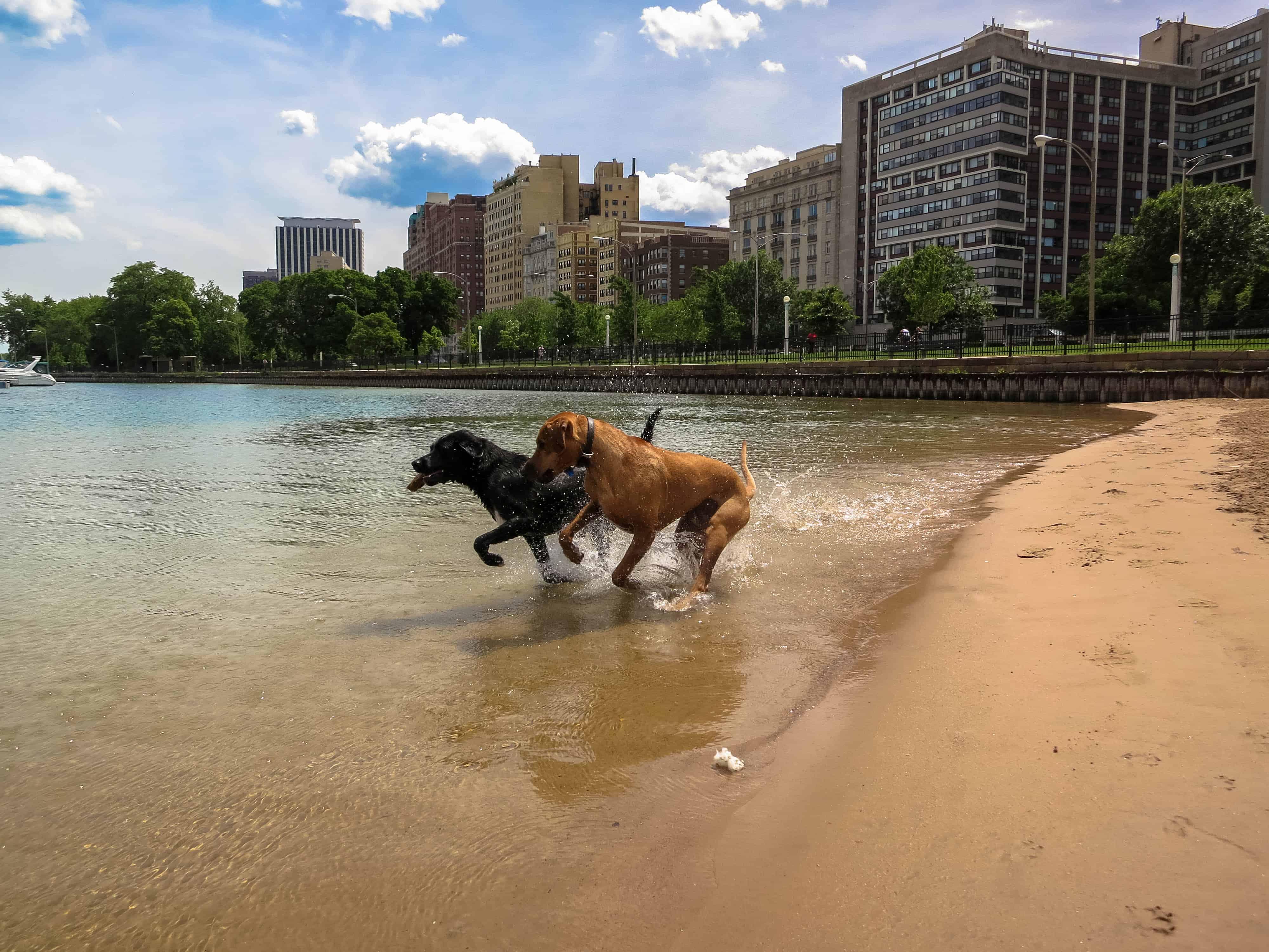 Rhodesian Ridgeback, pet adventure, dog blog, pet blog, marking our territory, petcentric, dog beach