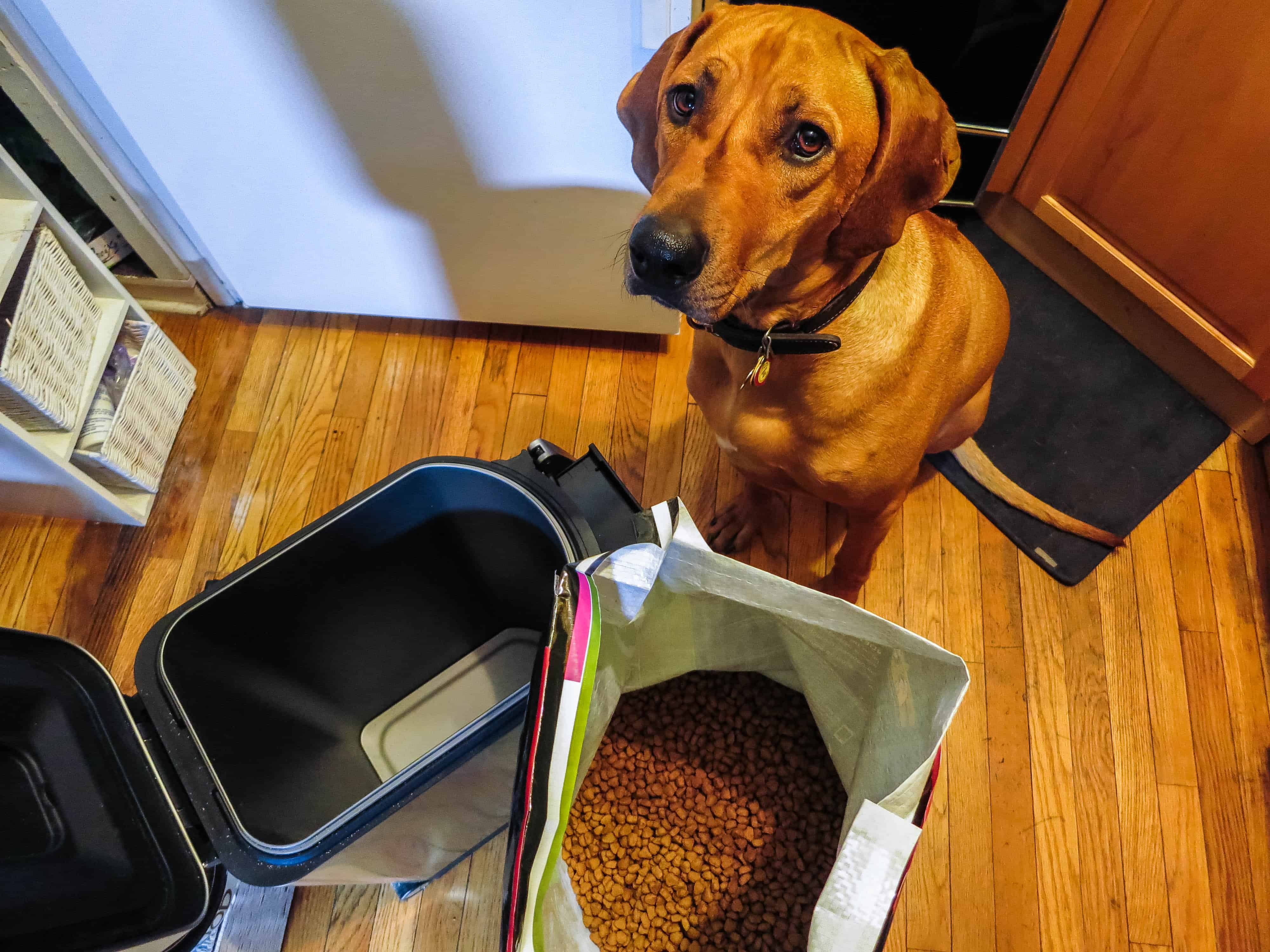 Rhodesian Ridgeback, pet adventure, marking our territory, petcentric, dog blog, pet blog, pet photos