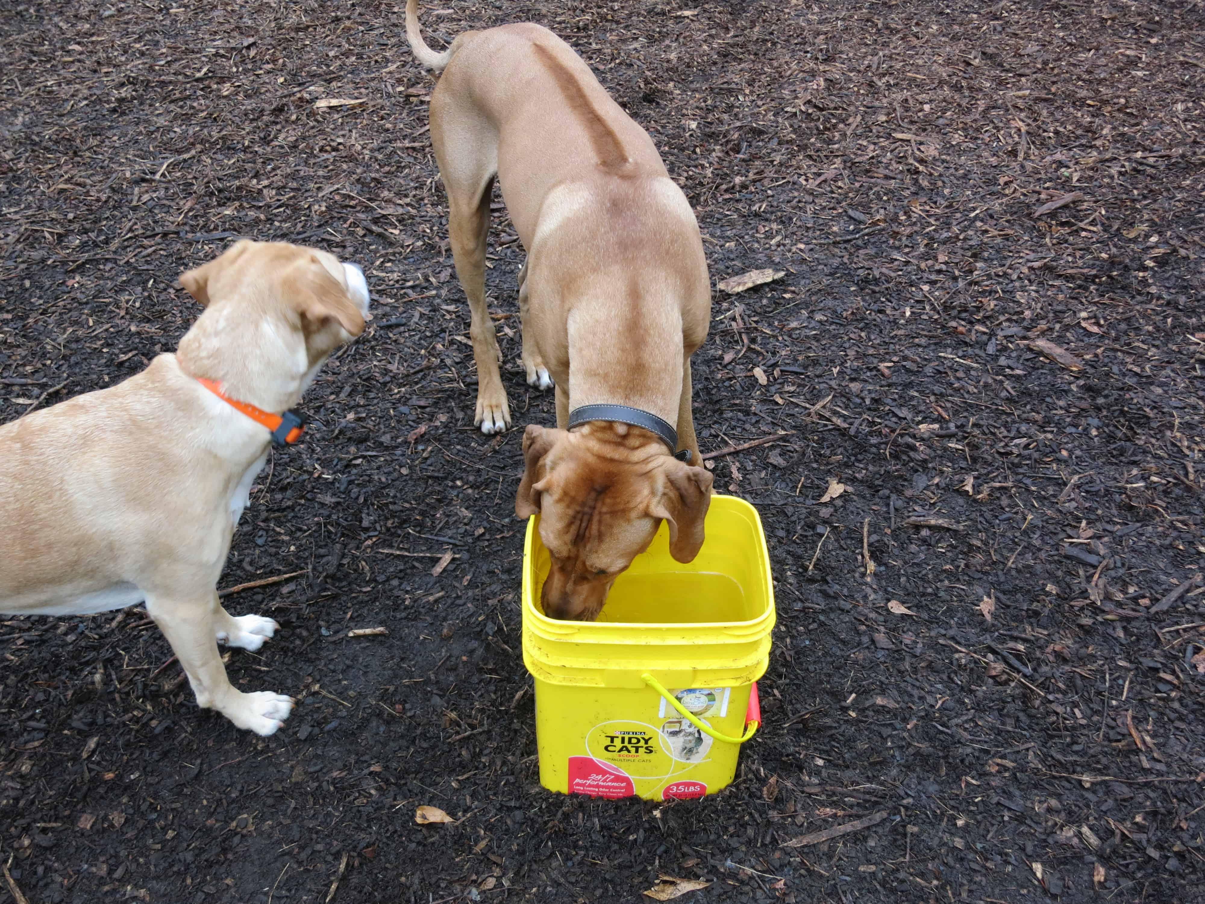 pet-friendly dog park