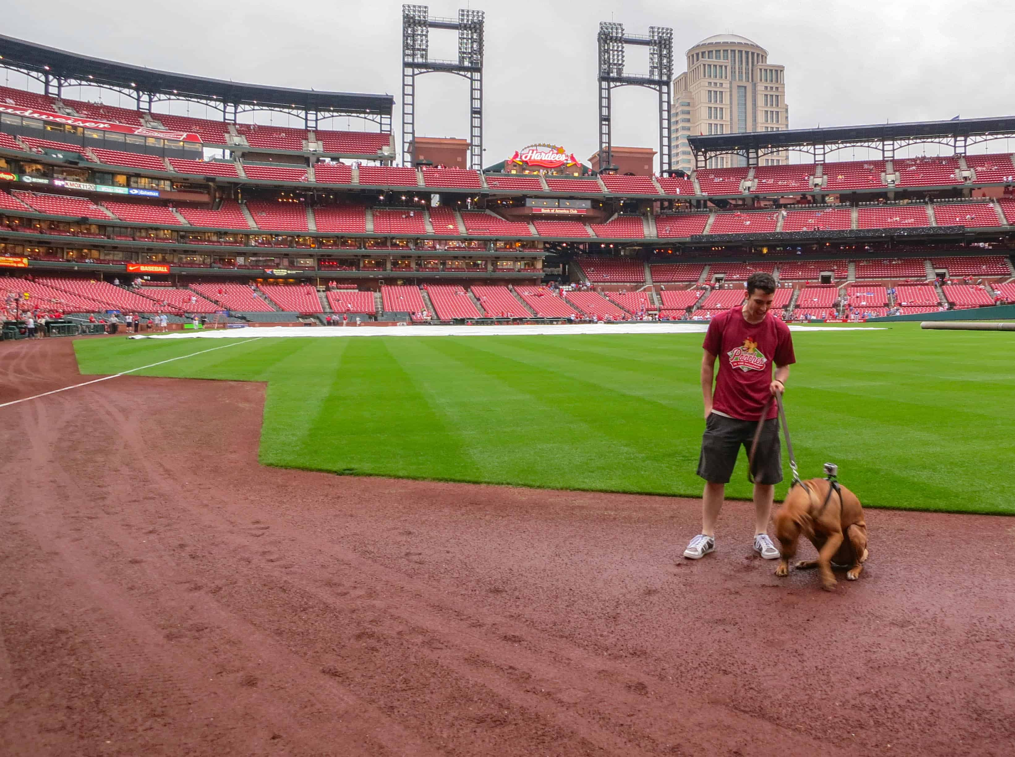 Pooches in the Park, marking our territory, petcentric, purina, st. louis cardinals, dog adventure, dog blog