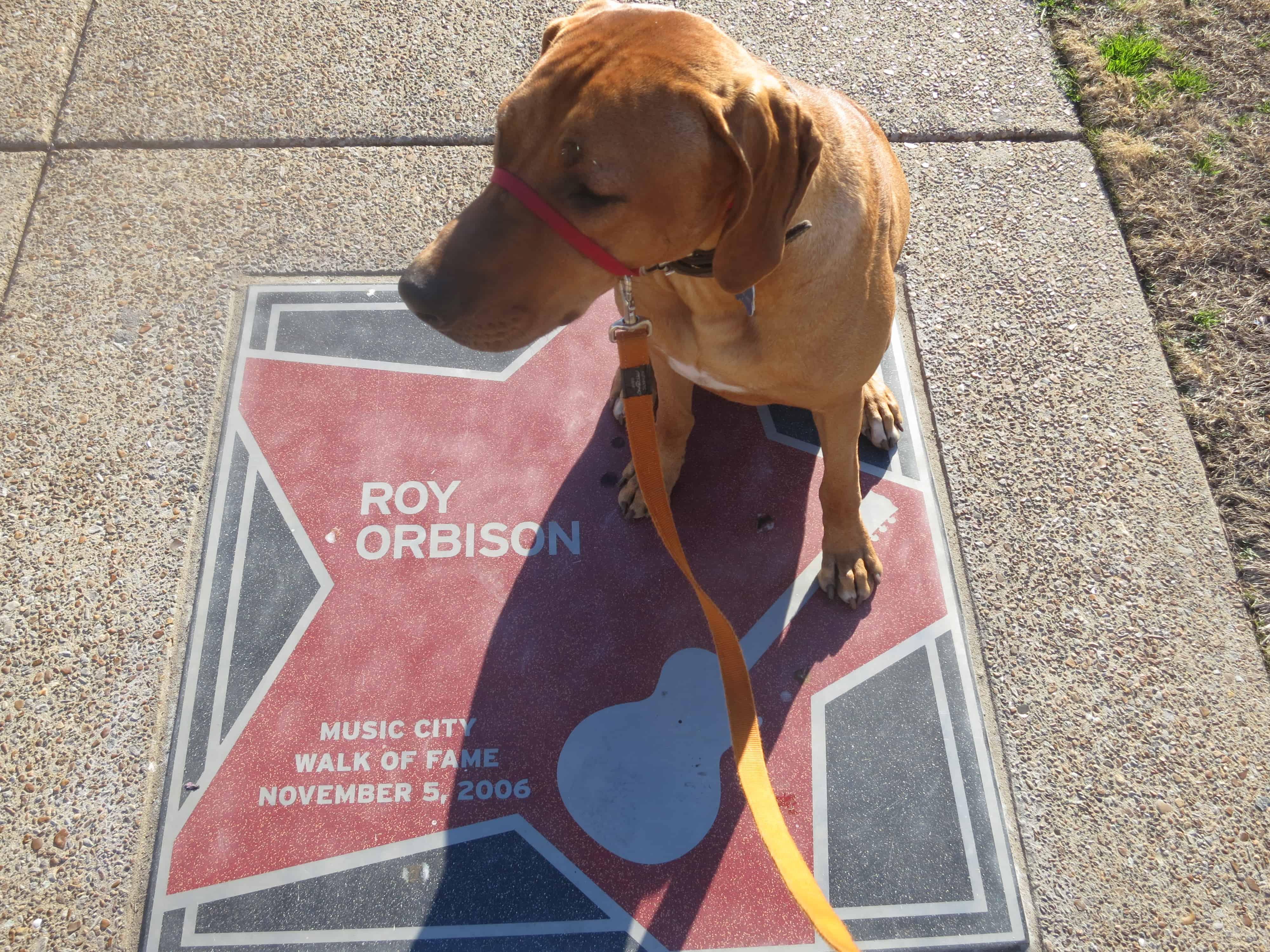 dog friendly Nashville