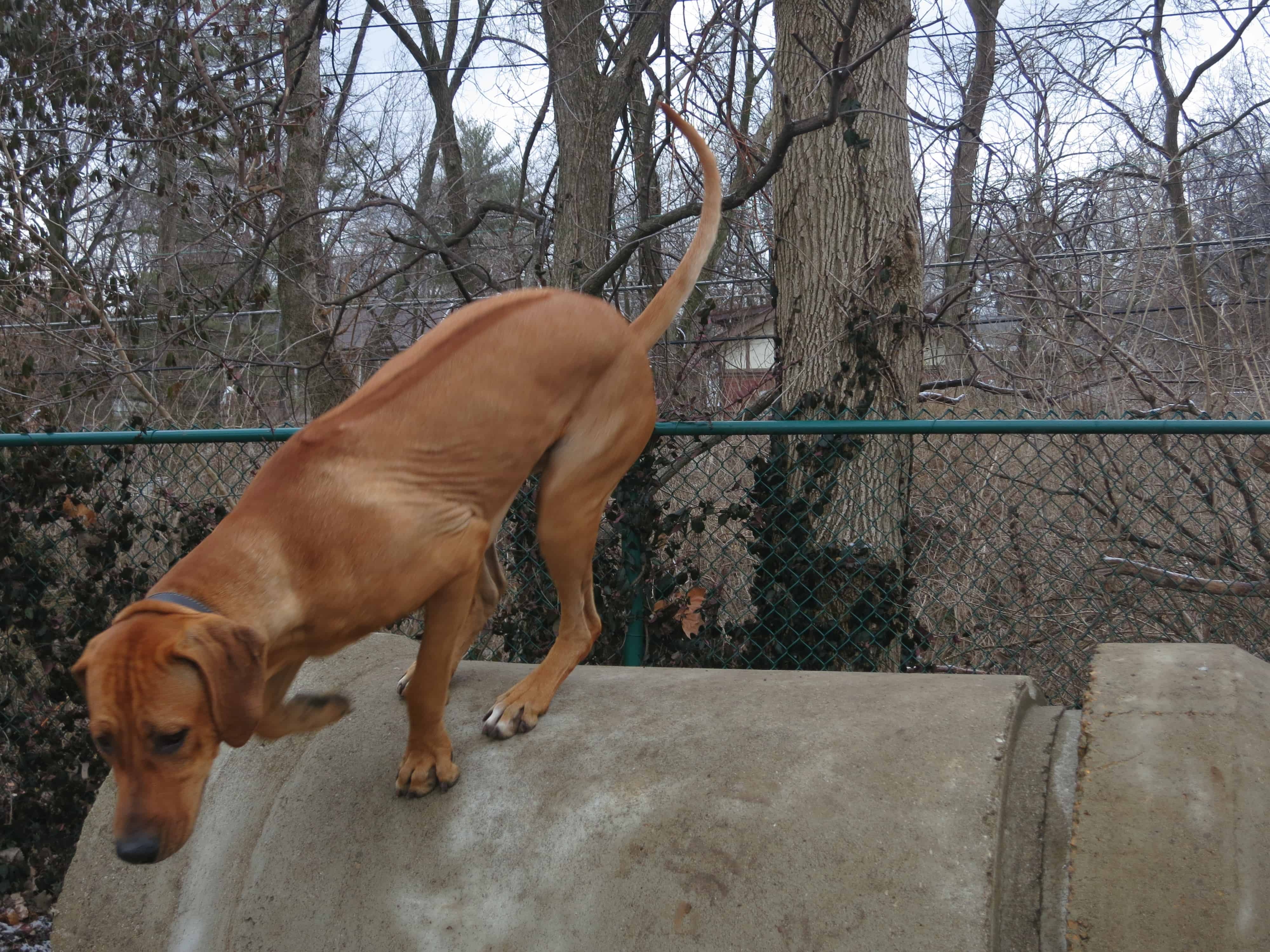 dog friendly st. louis