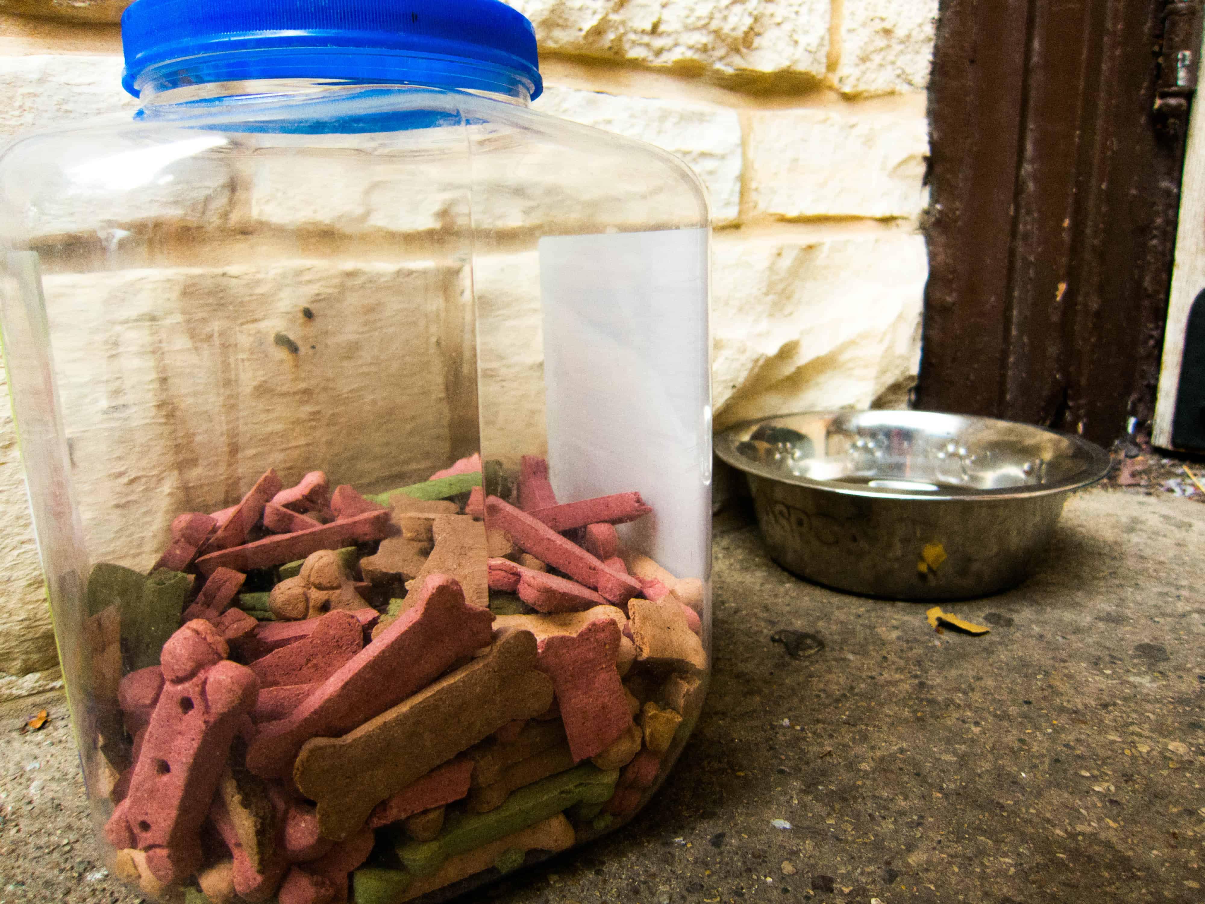 Rhodesian Ridgeback, pet friendly, petcentric, dog adventure, marking our territory