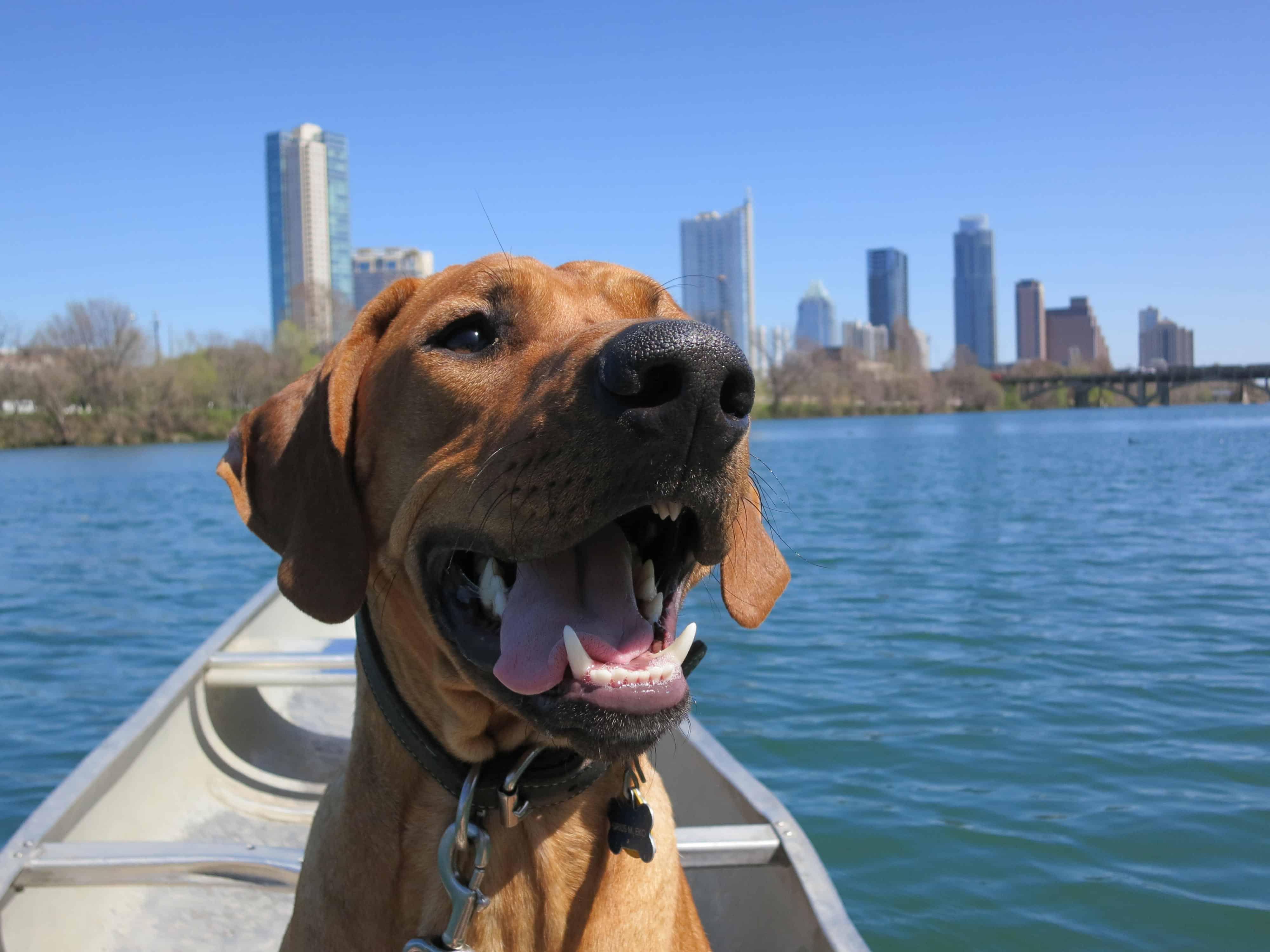 dog friendly park Austin
