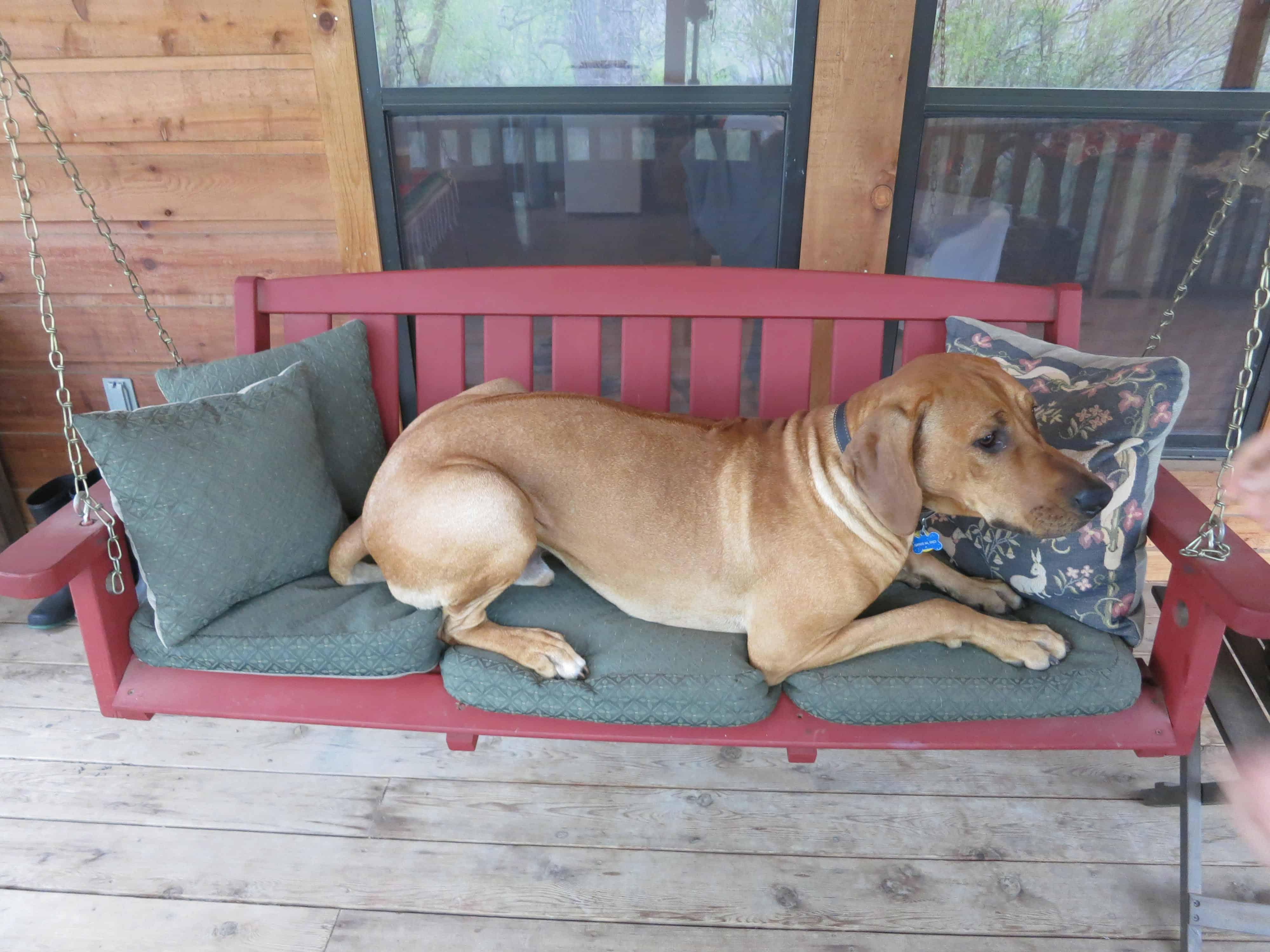 pet friendly dog blog