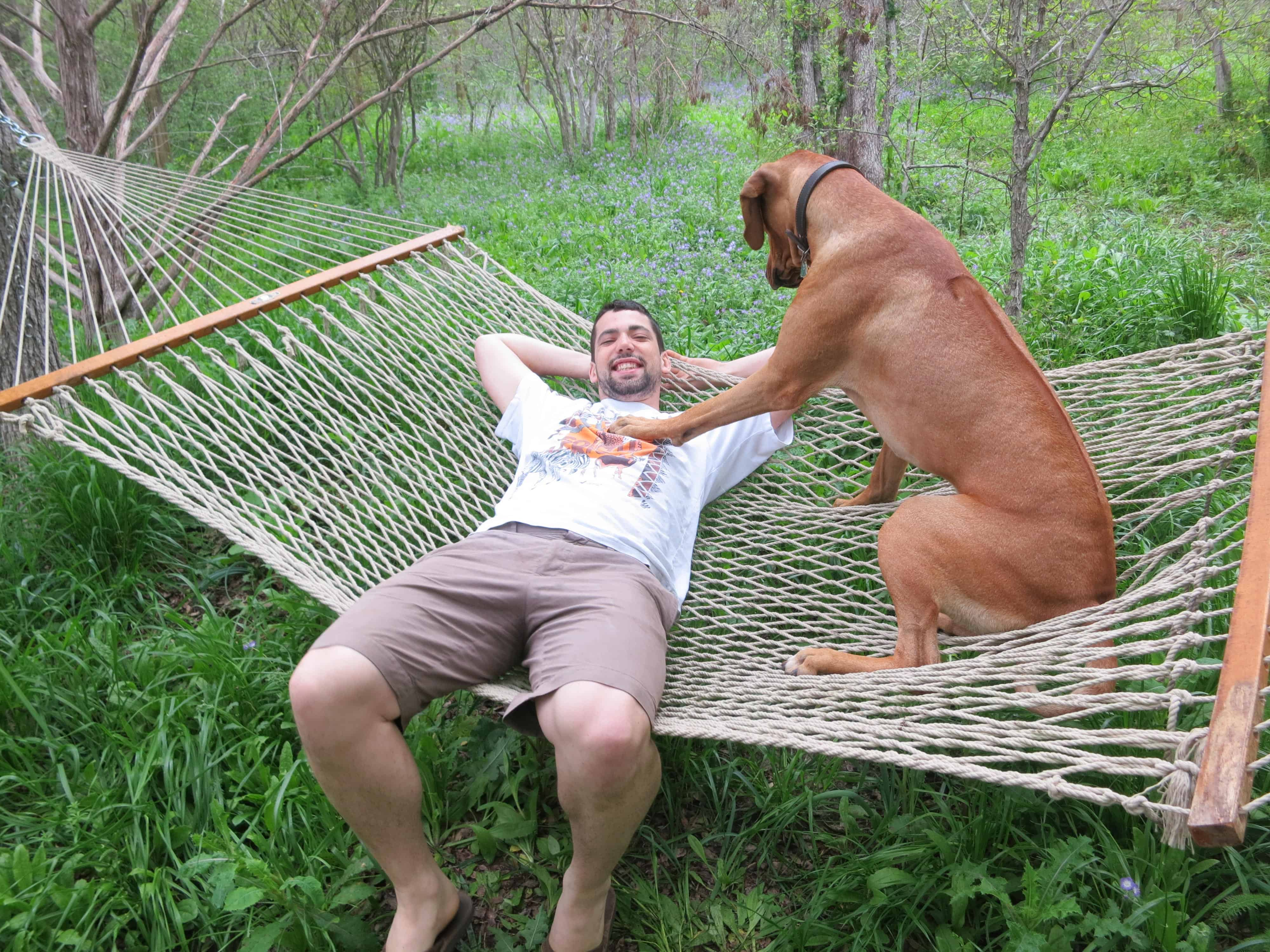 Rhodesian Ridgeback, dog blog, dog adventure