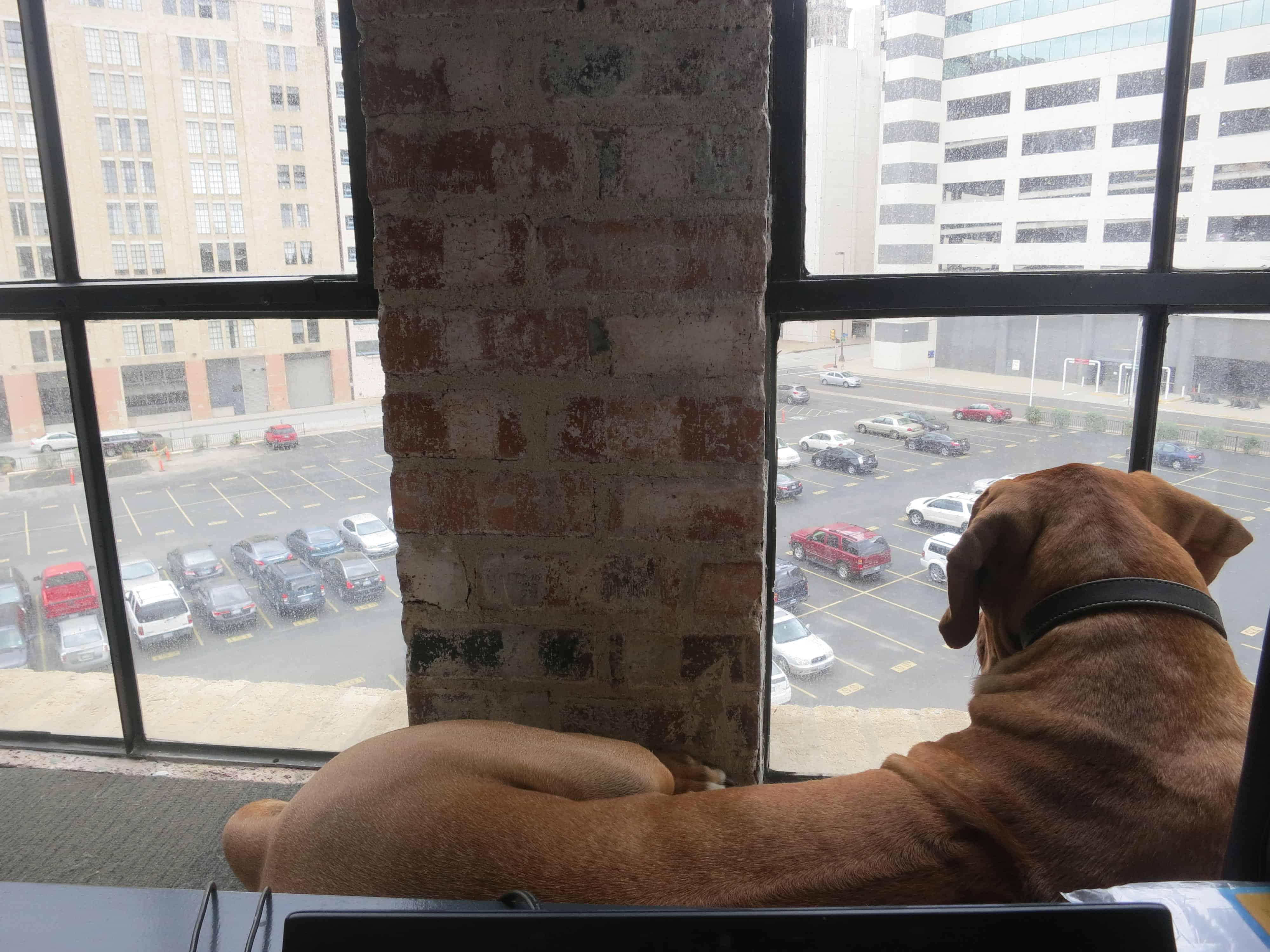 dog friendly hotel dallas
