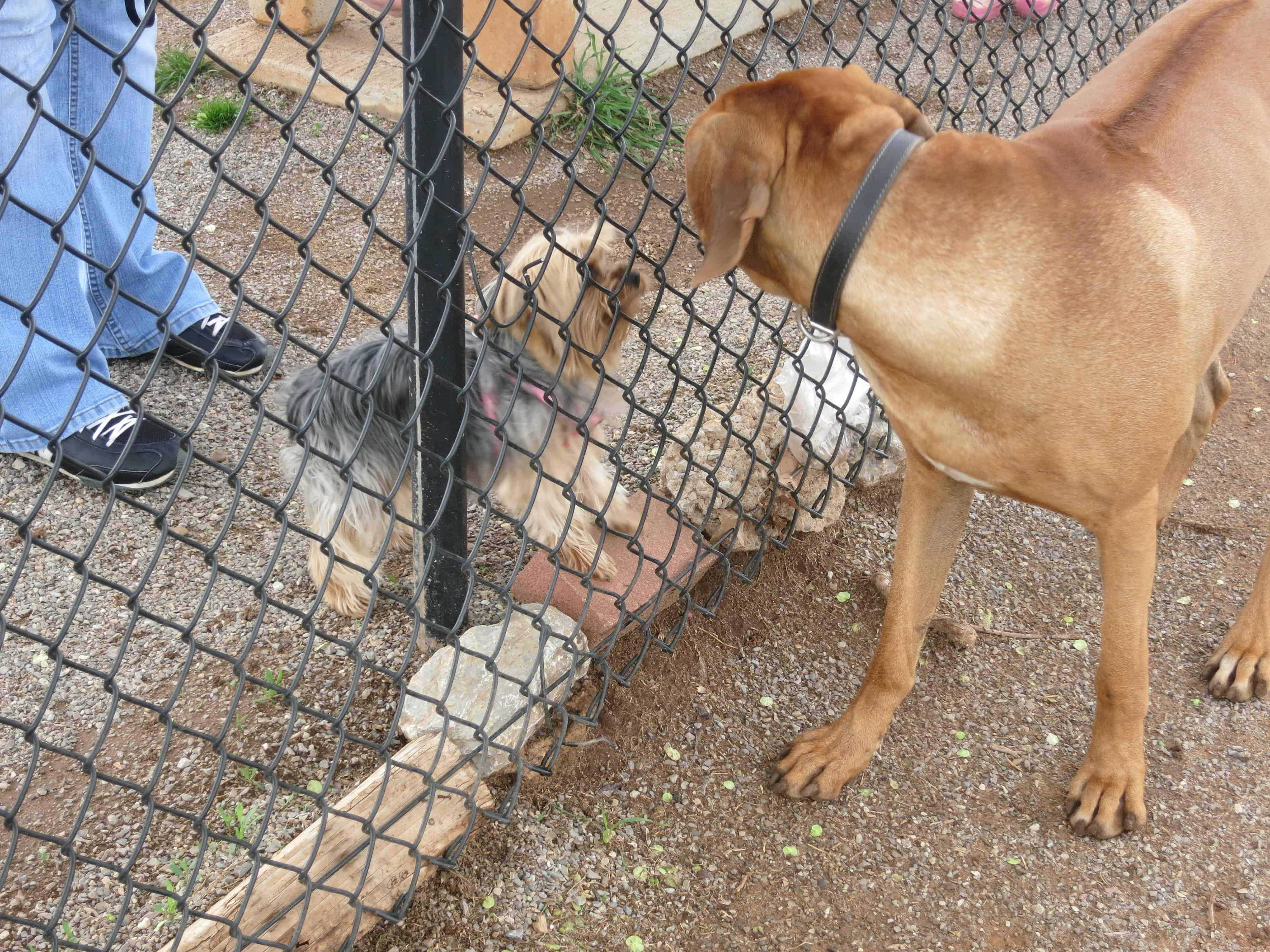 dog friendly oklahoma city