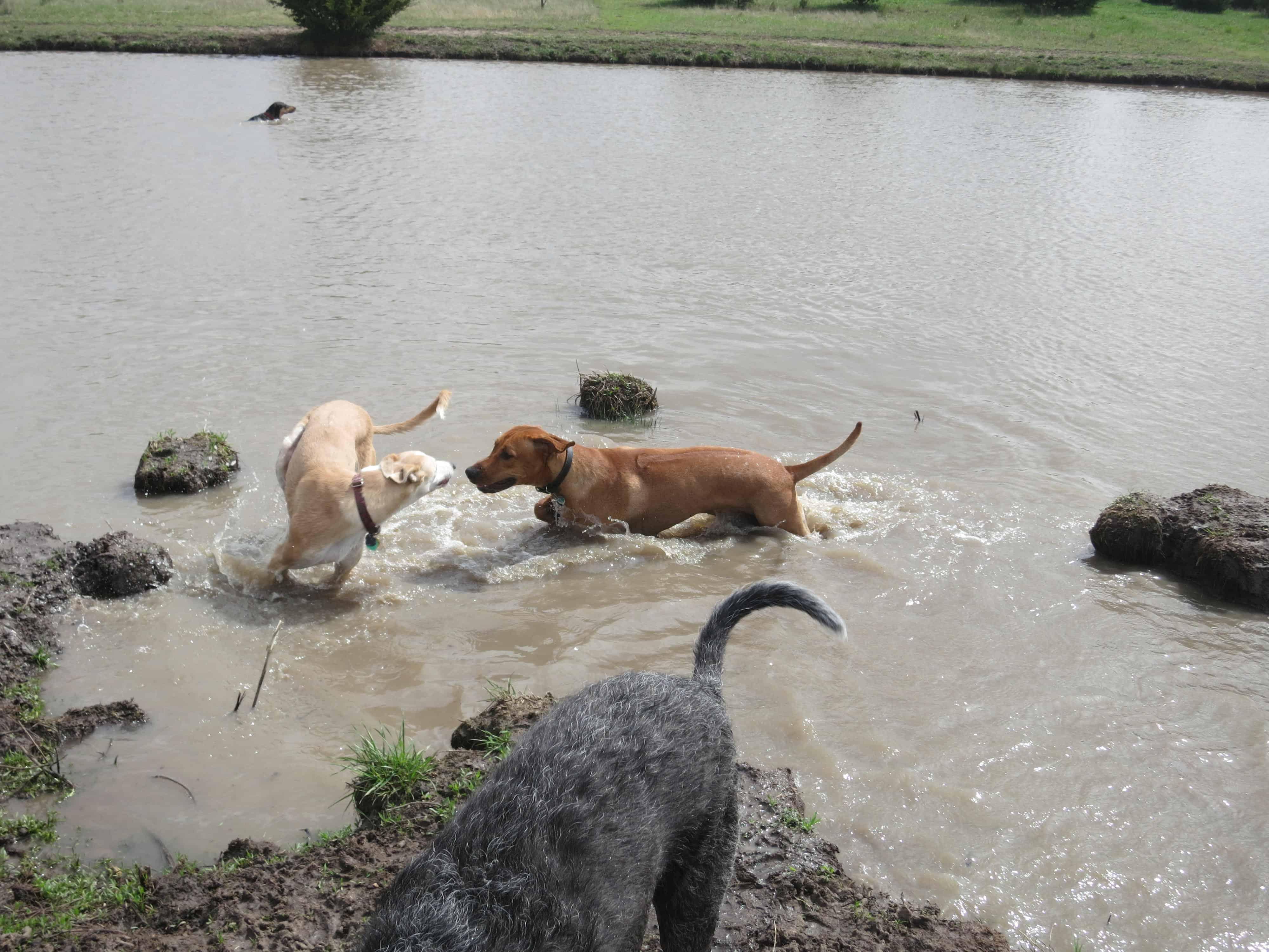 dog  friendly wichita
