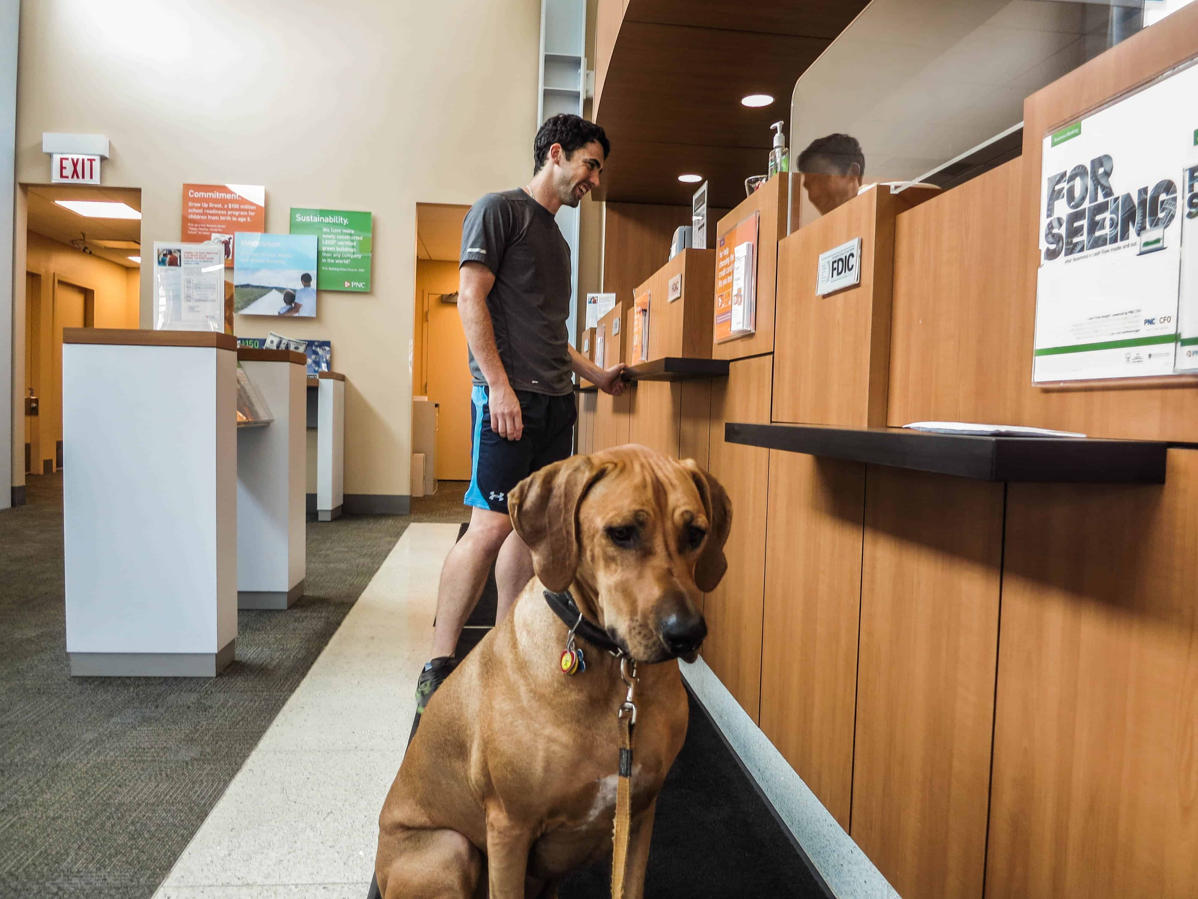 Rhodesian Ridgeback, adventure, dogs, marking our territory, petcentric