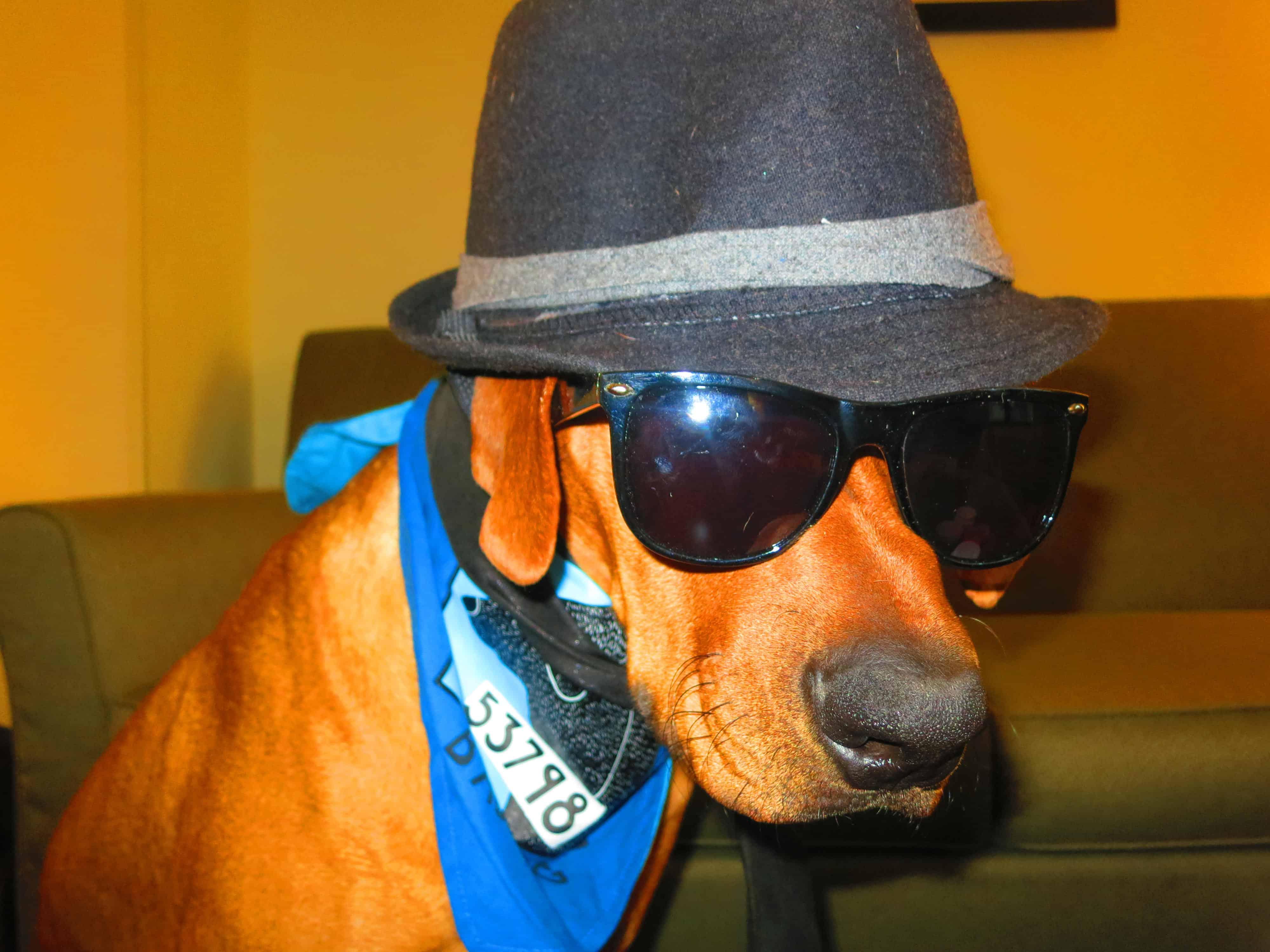 dog friendly las vegas