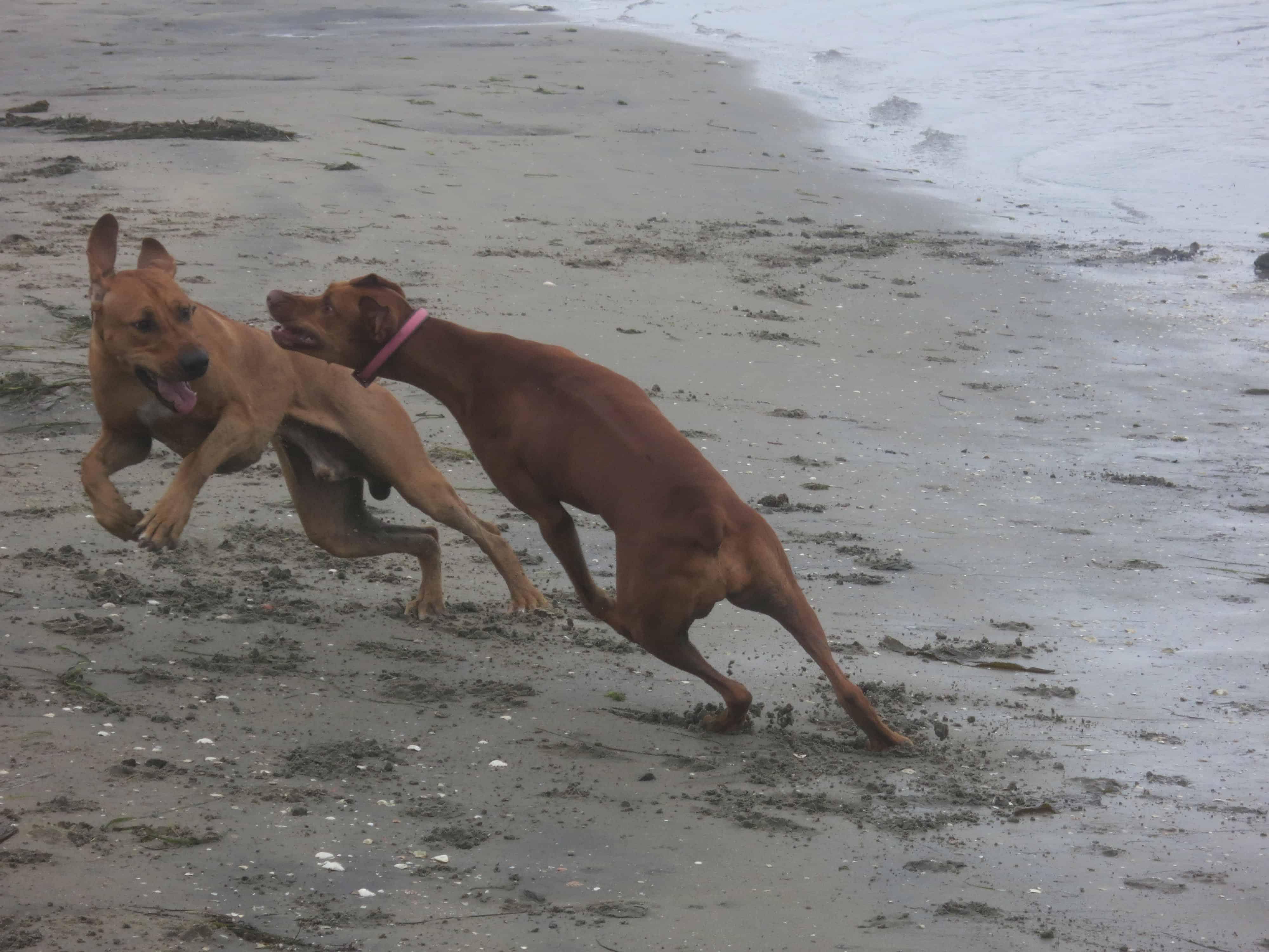 dog friendly san diego