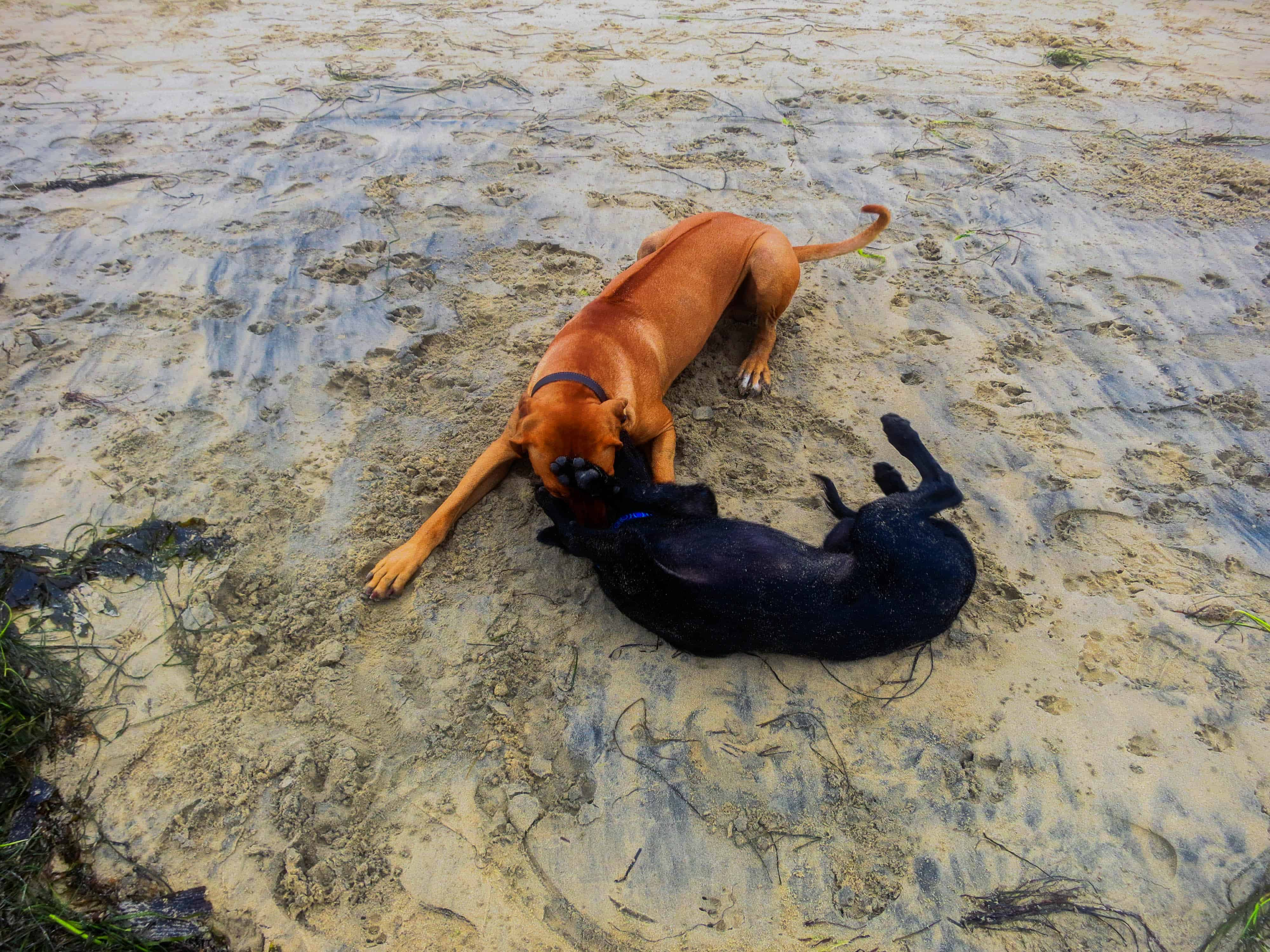 Teaching the puppy