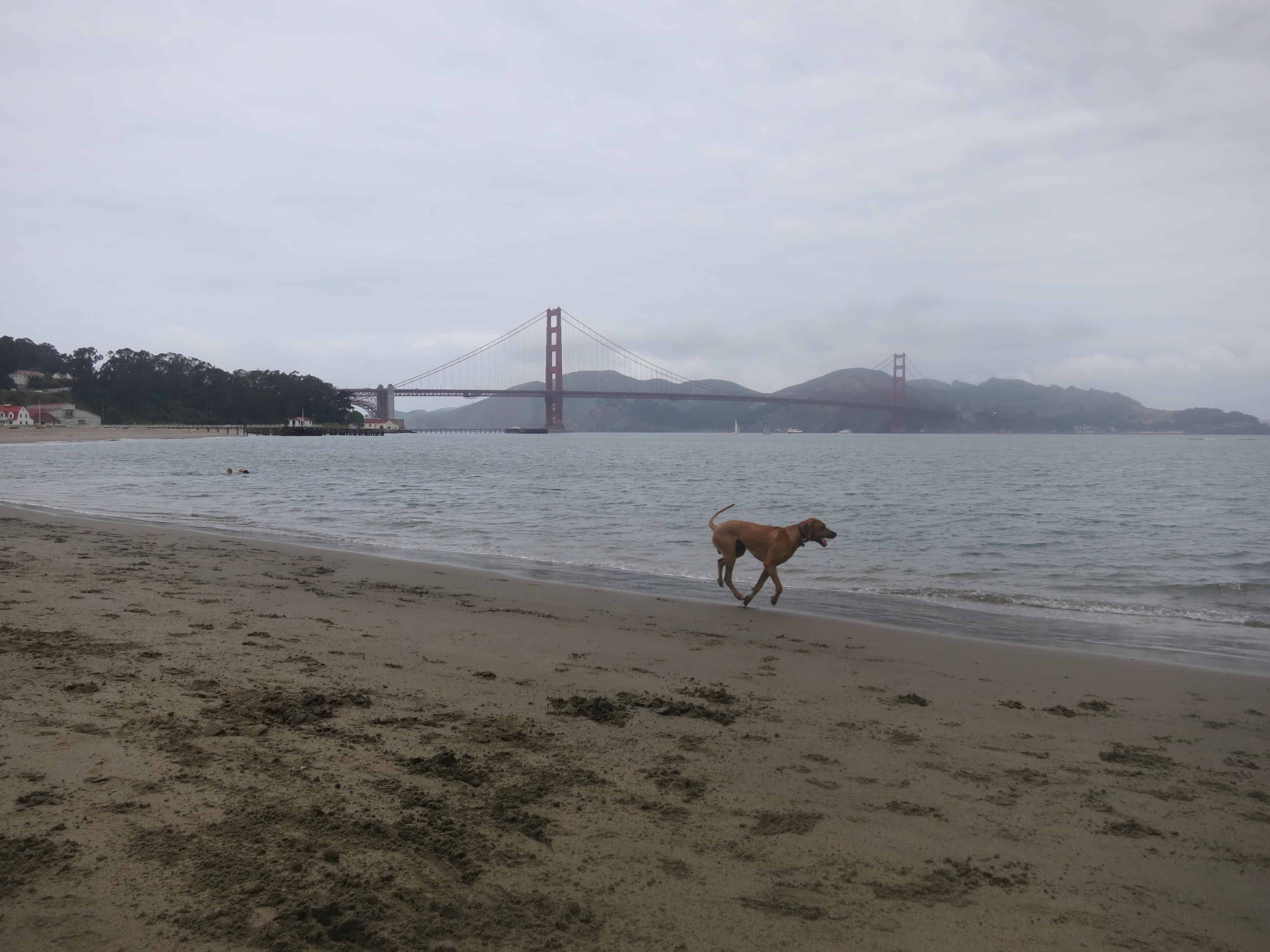 dog friendly san francisco