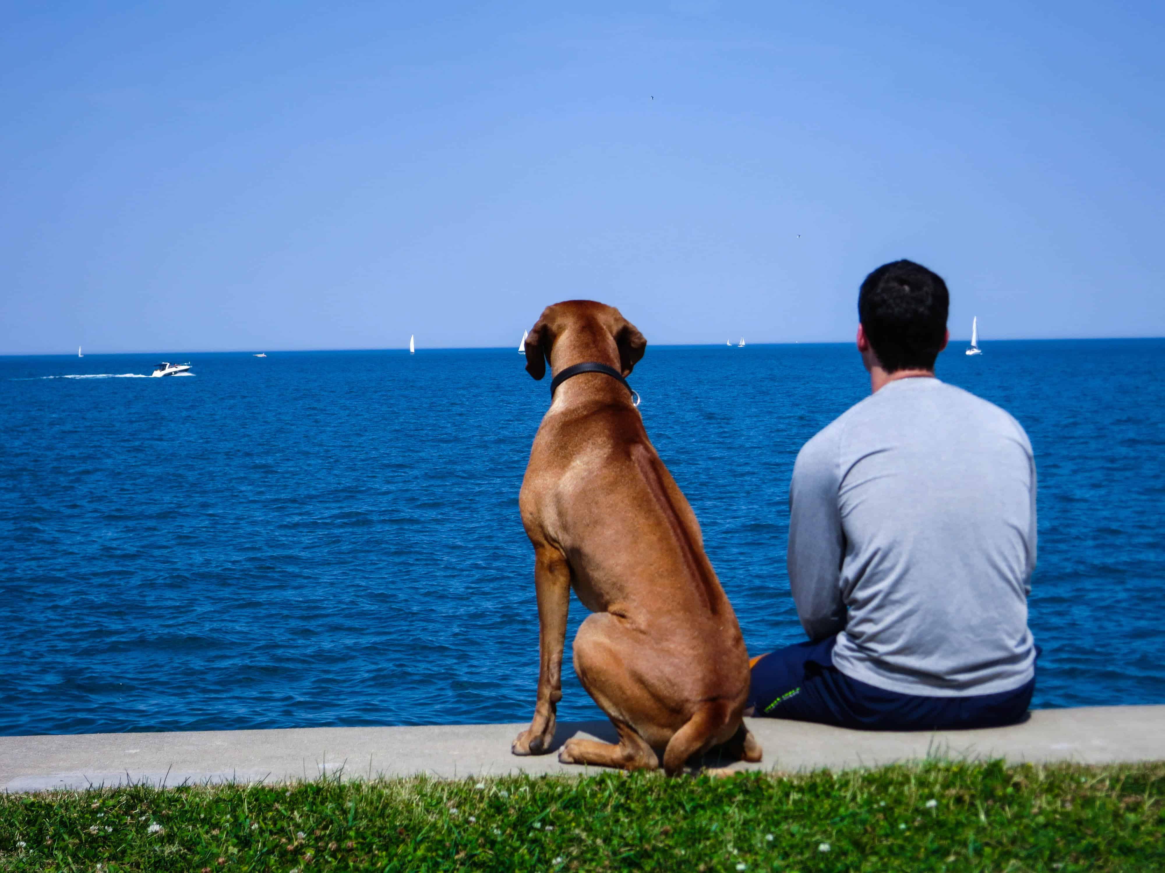 pet blog, dog adventure