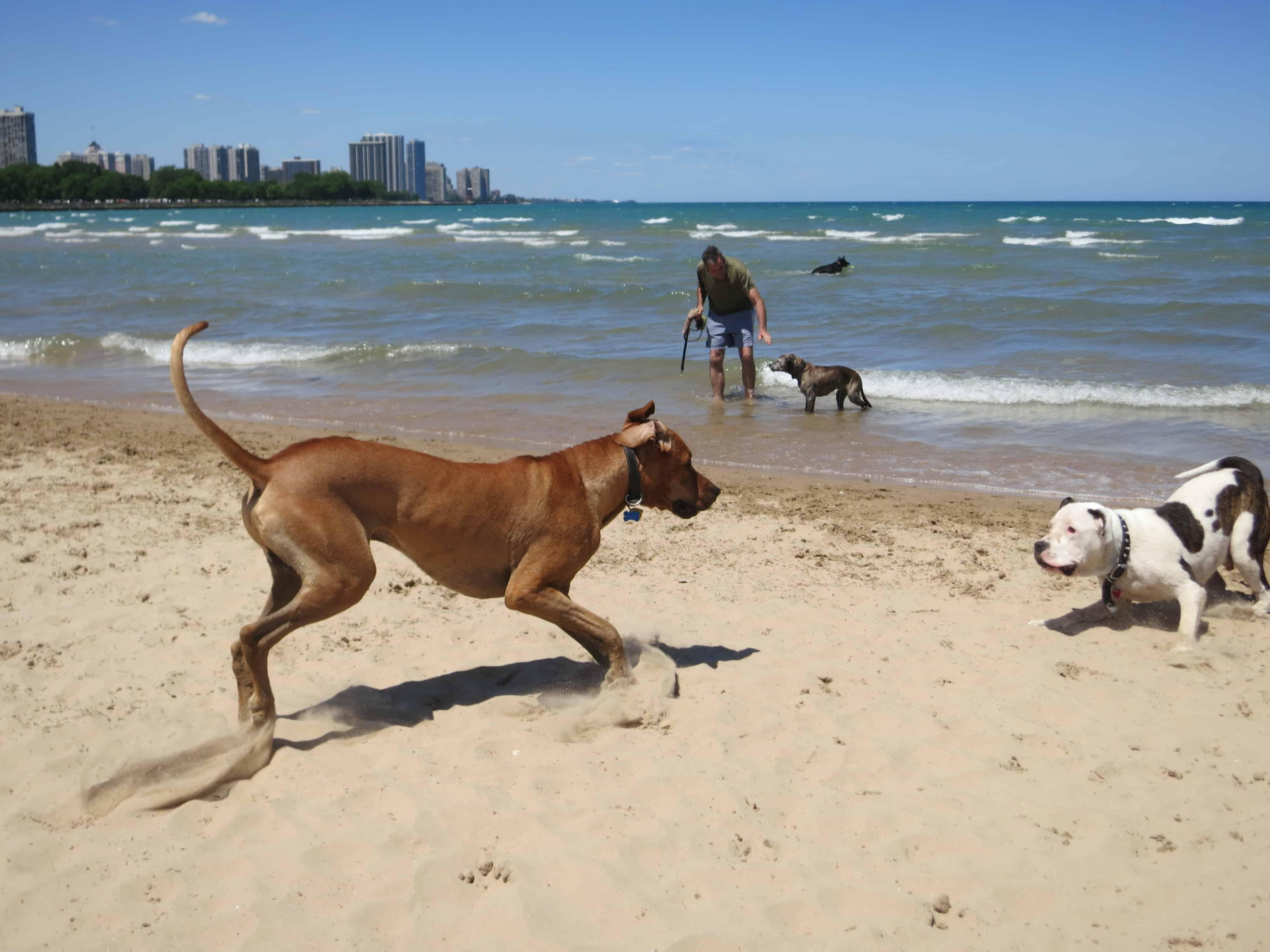 dog friendly chicago