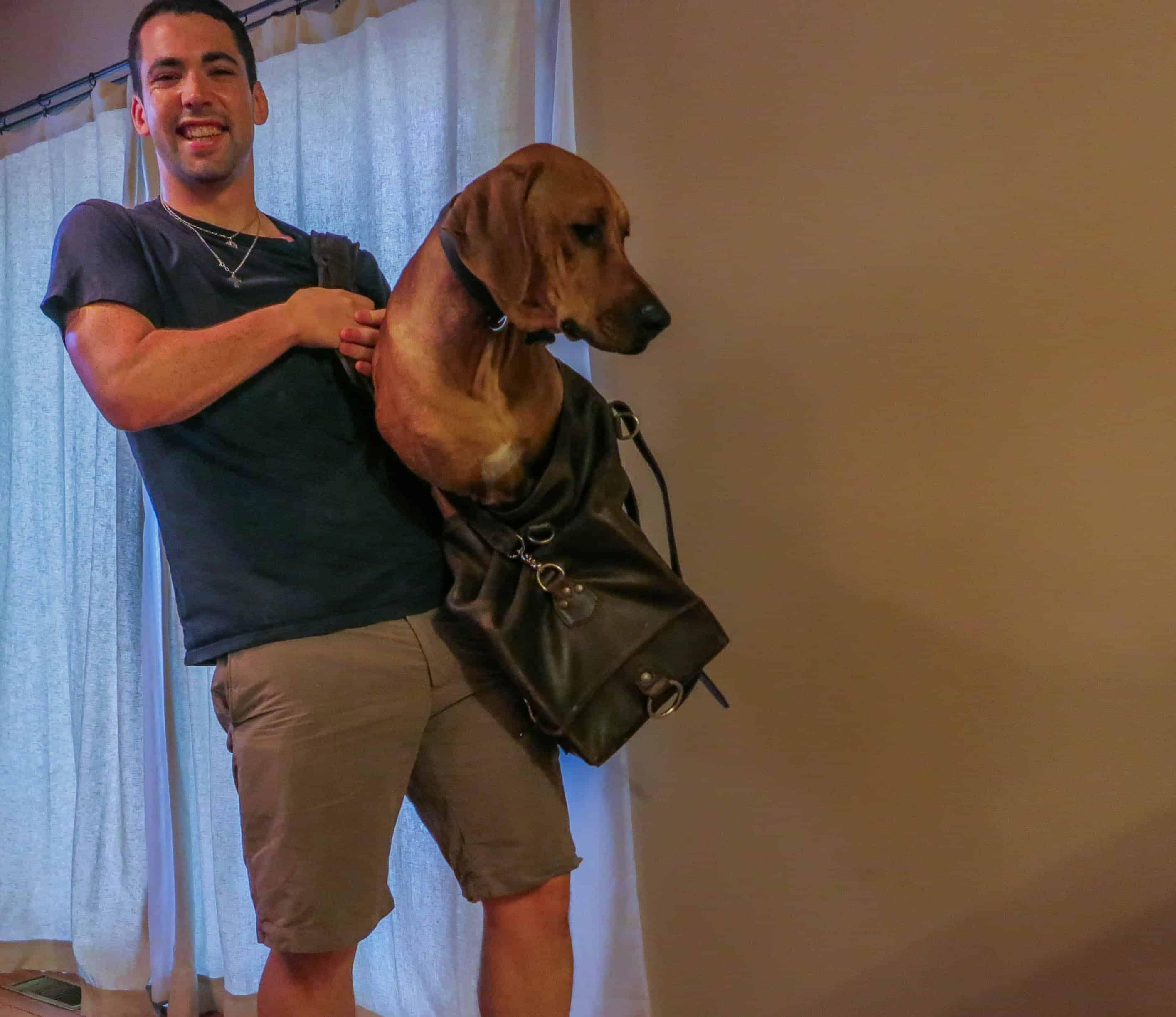Rhodesian Ridgeback, pet-friendly apartment
