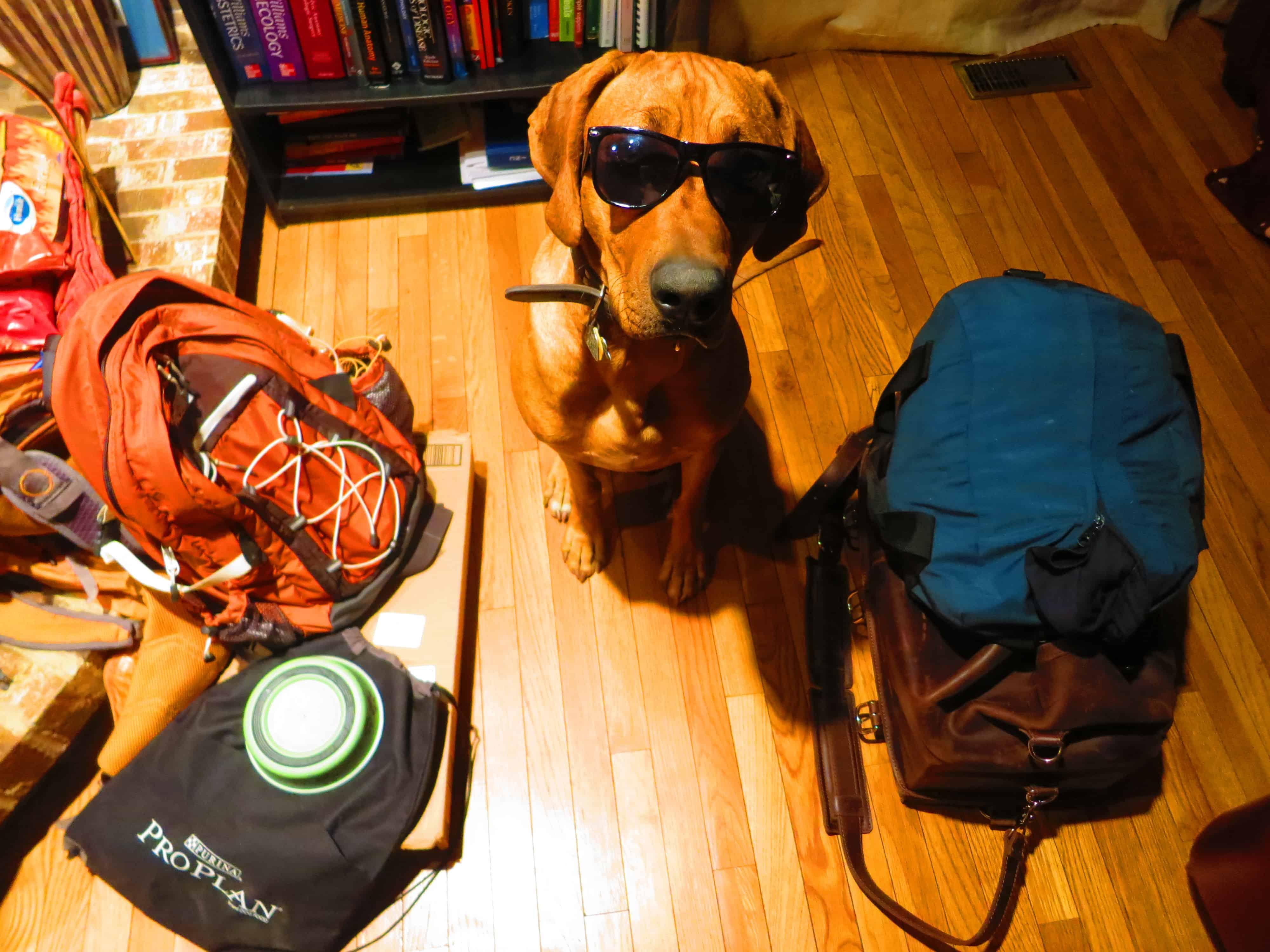 dog friendly travel