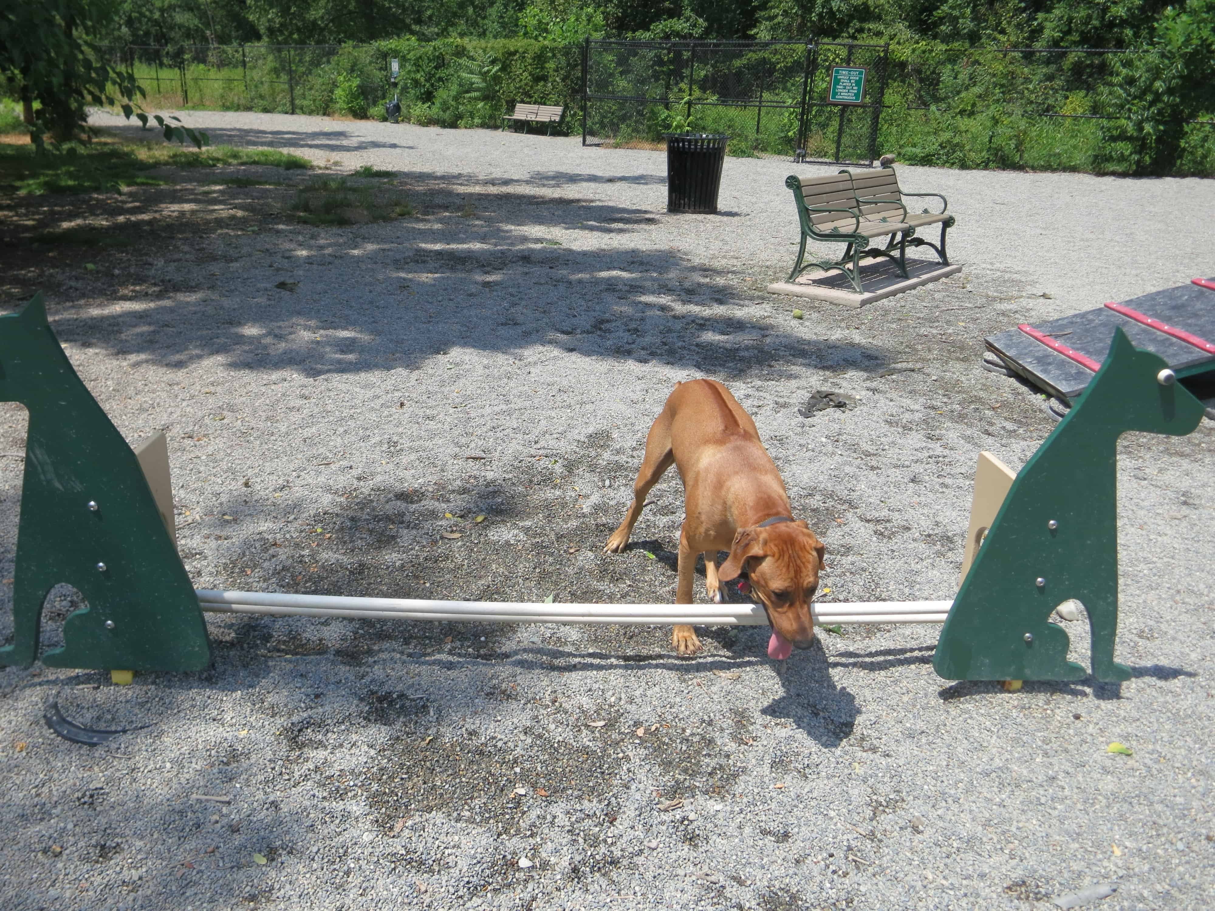 dog friendly adventure