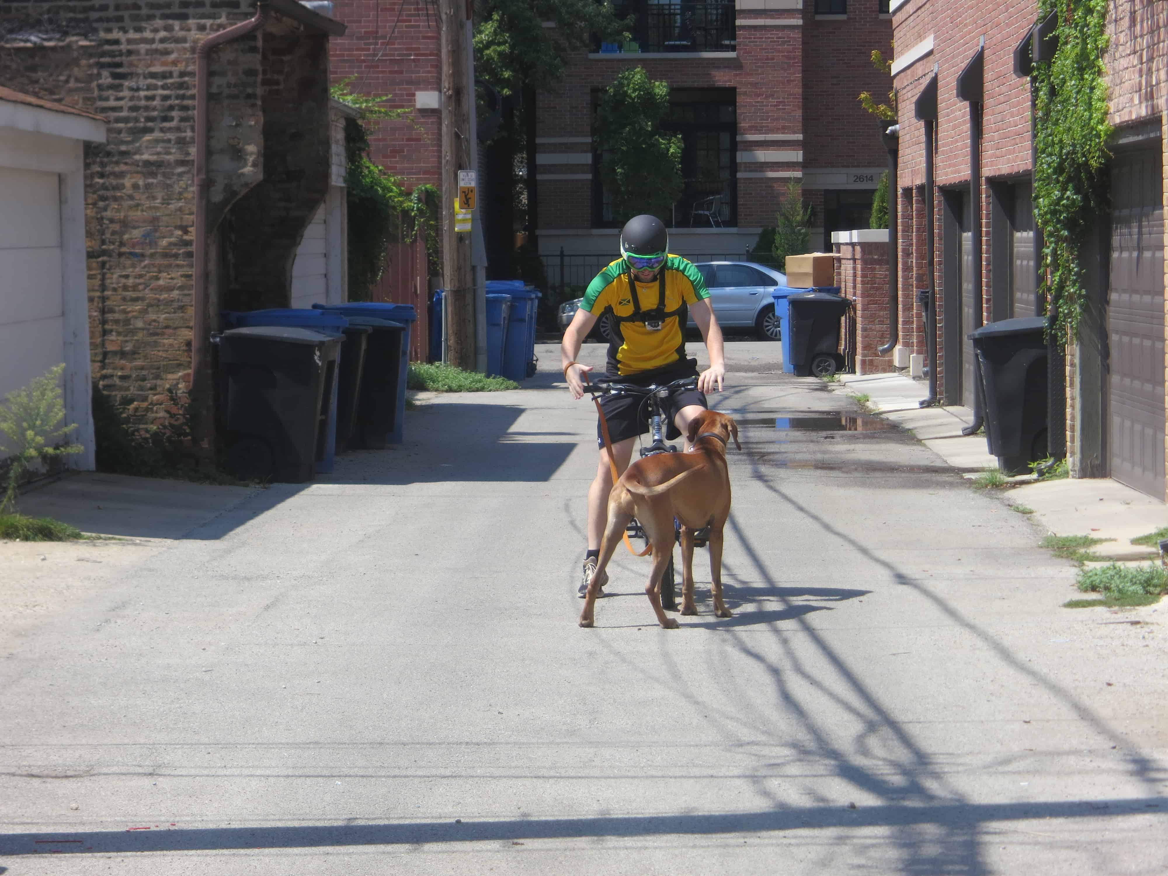dog friendly bucket list blog