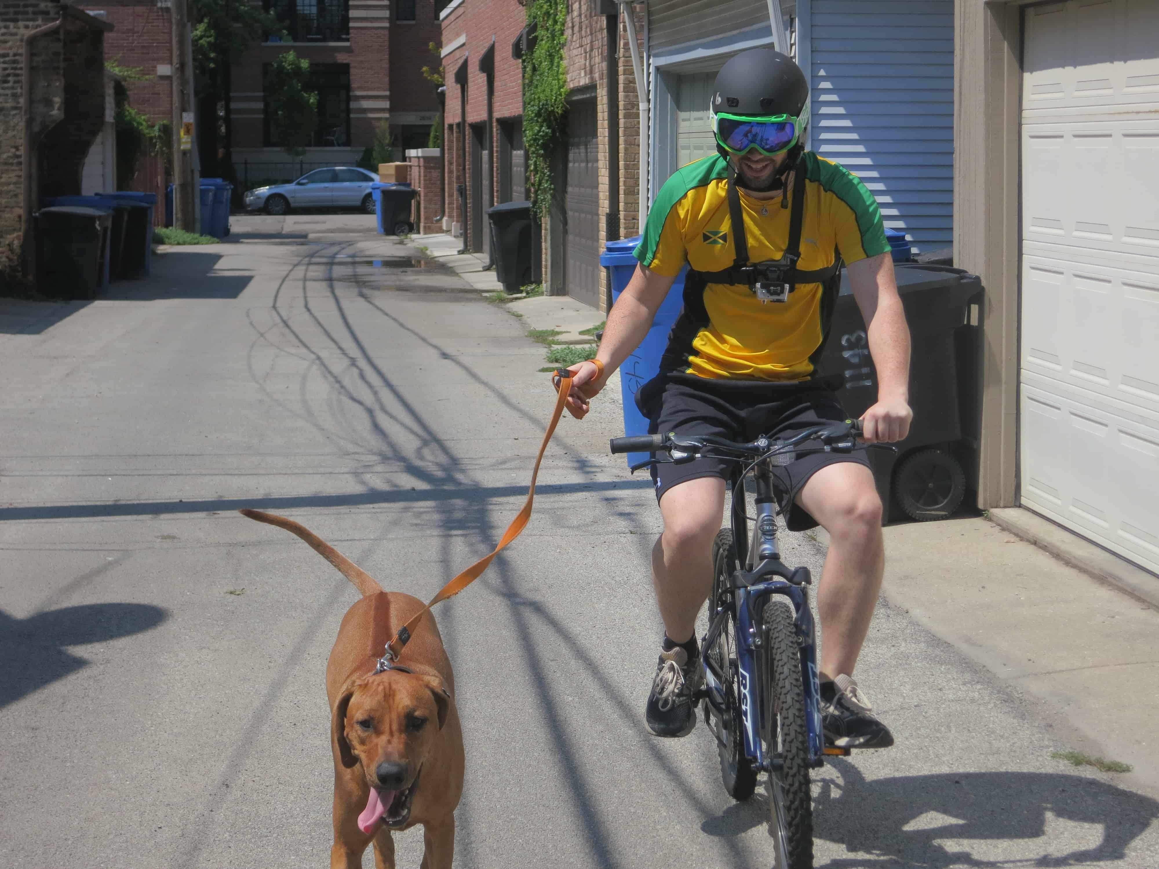 pet friendly bucket list dog blog