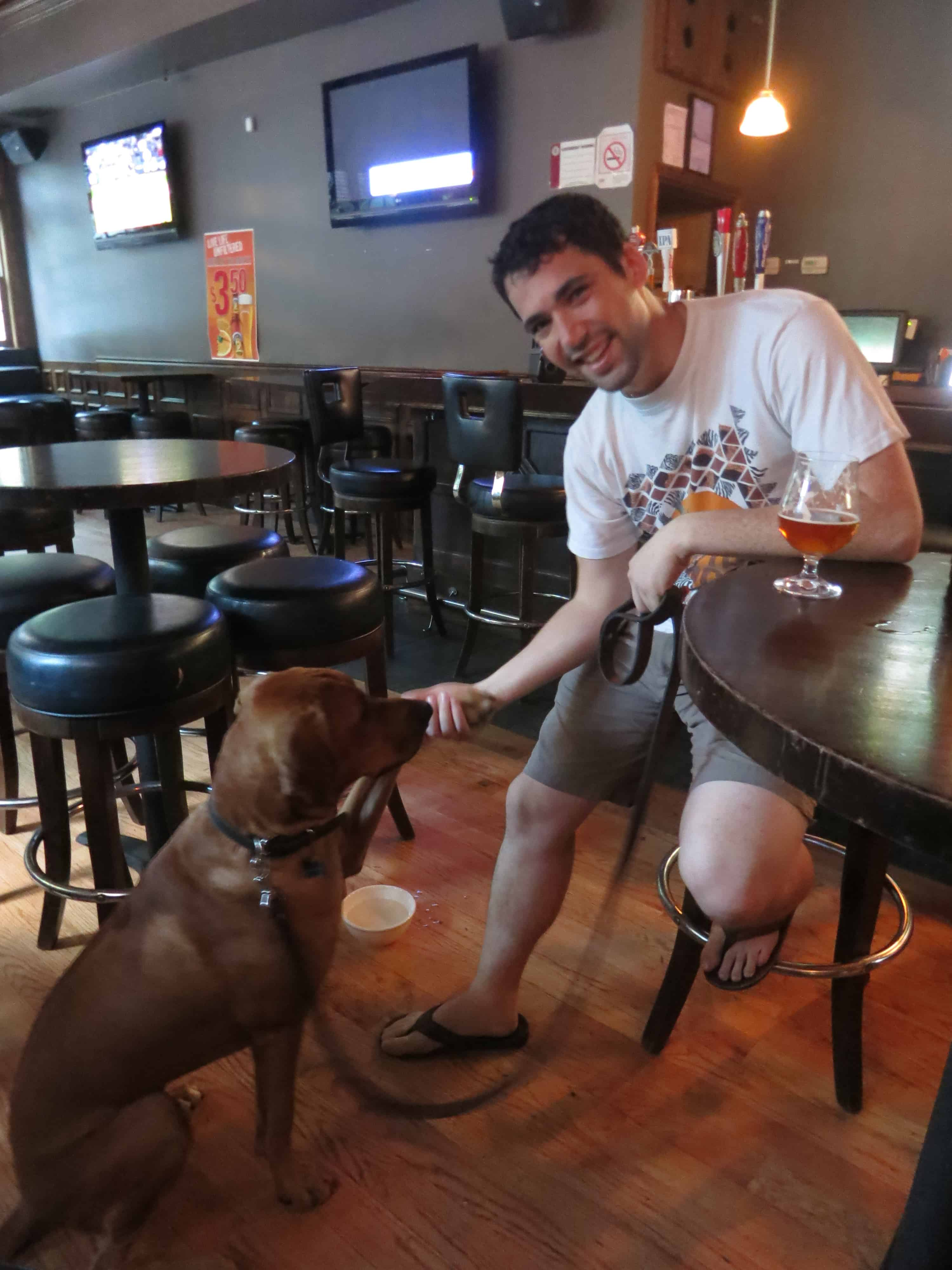 dog friendly chicago pet friendly travel