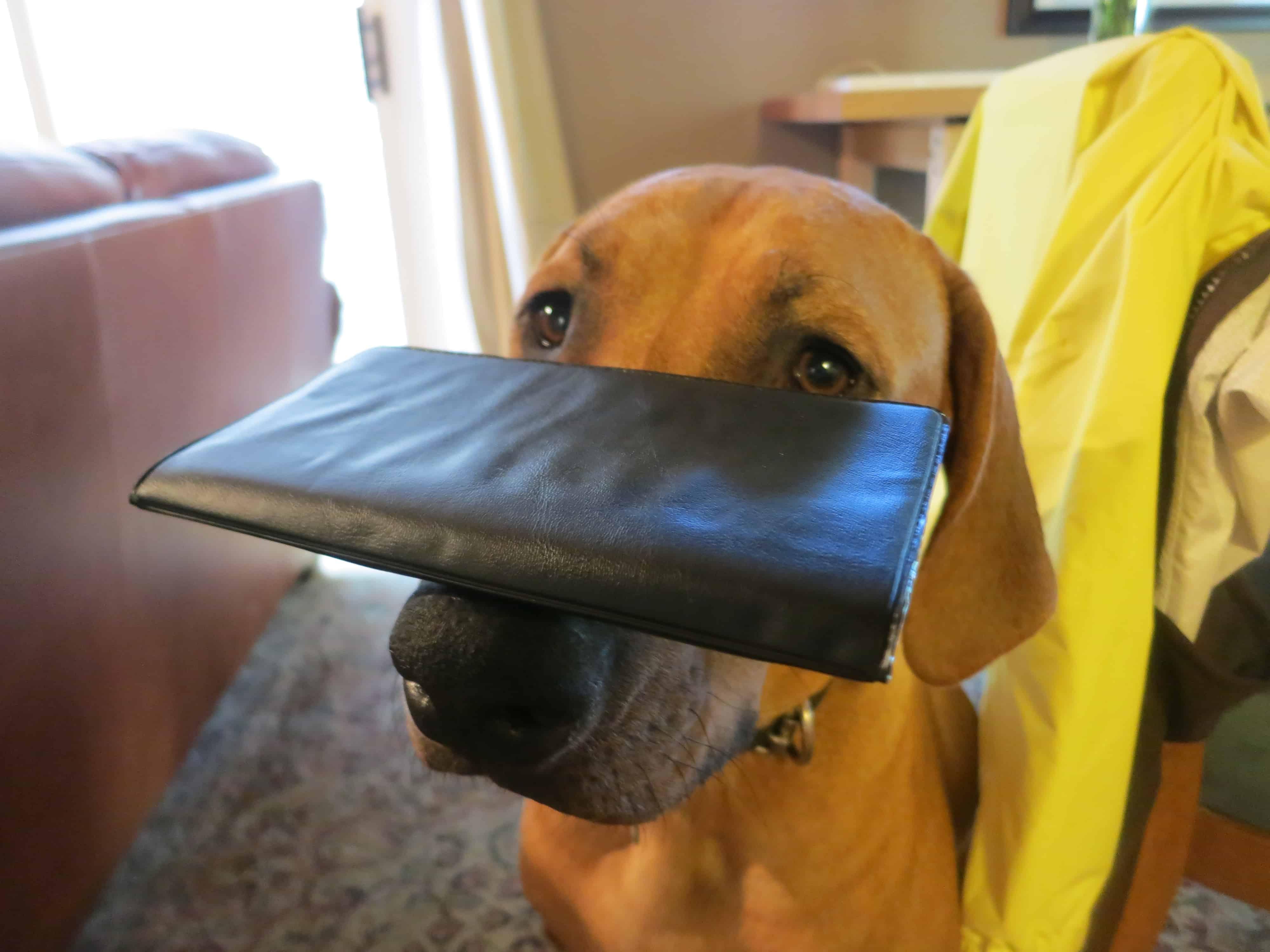 pet friendly blog dog friendly chicago